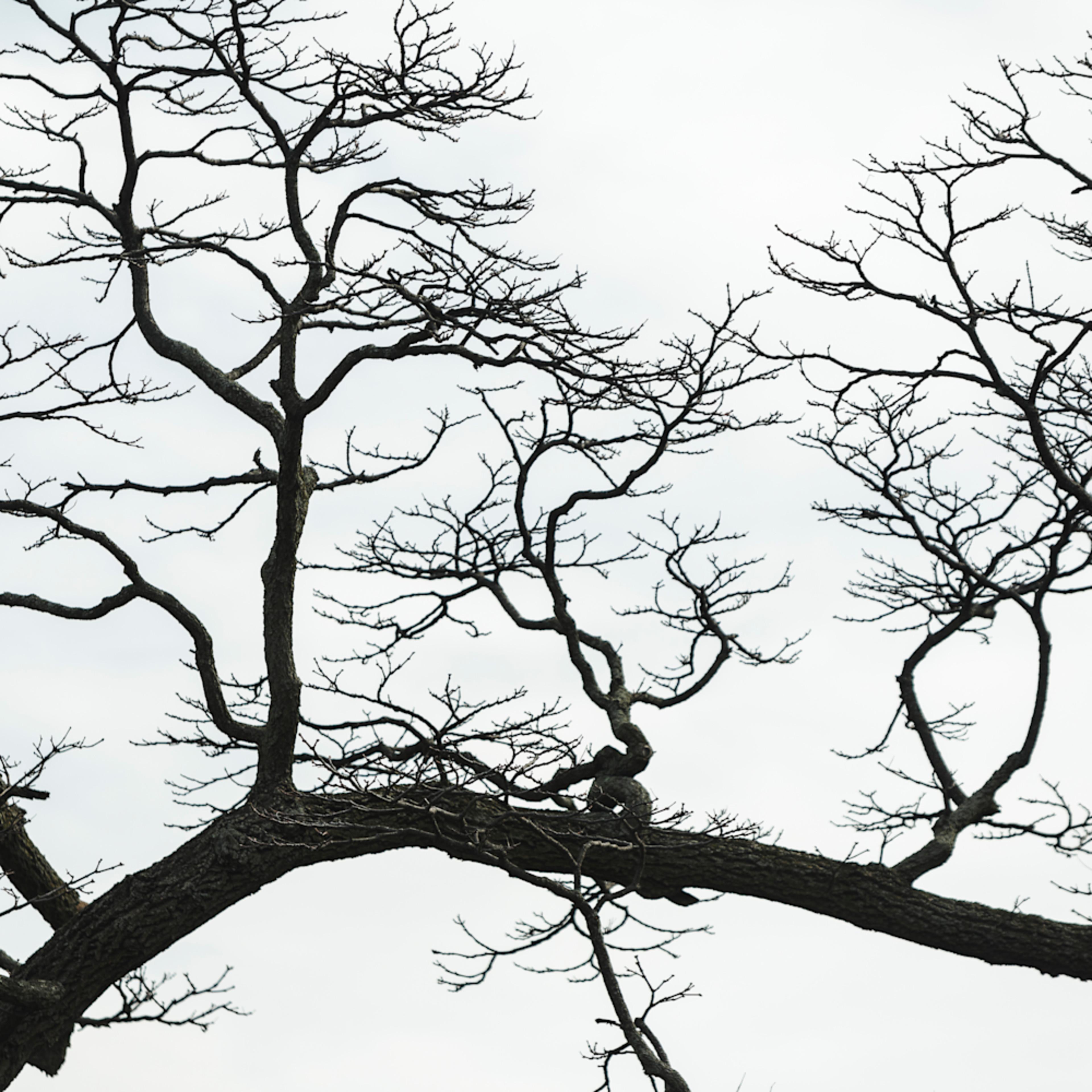 Trees  41 lkg5ks