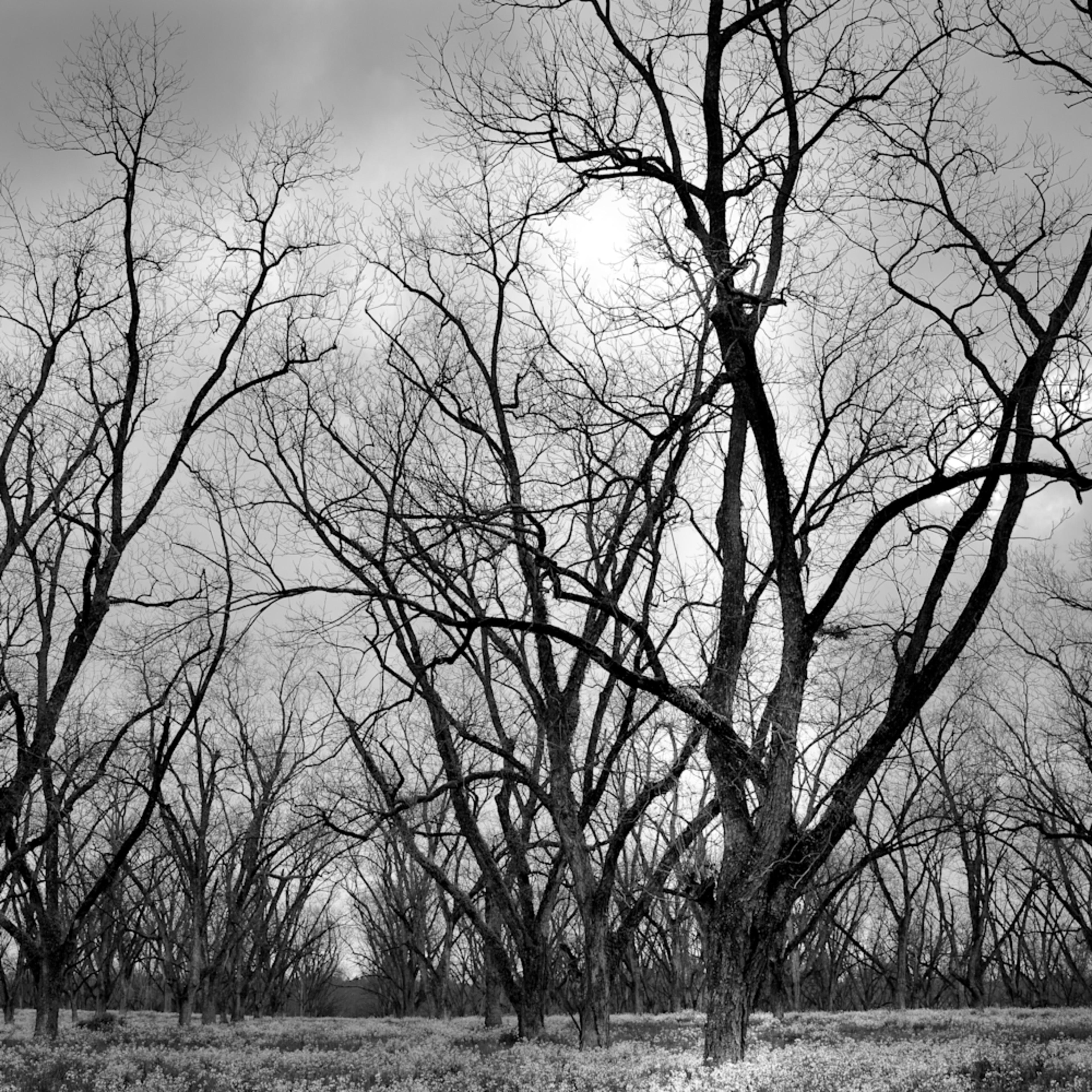Trees  48 wotm3d
