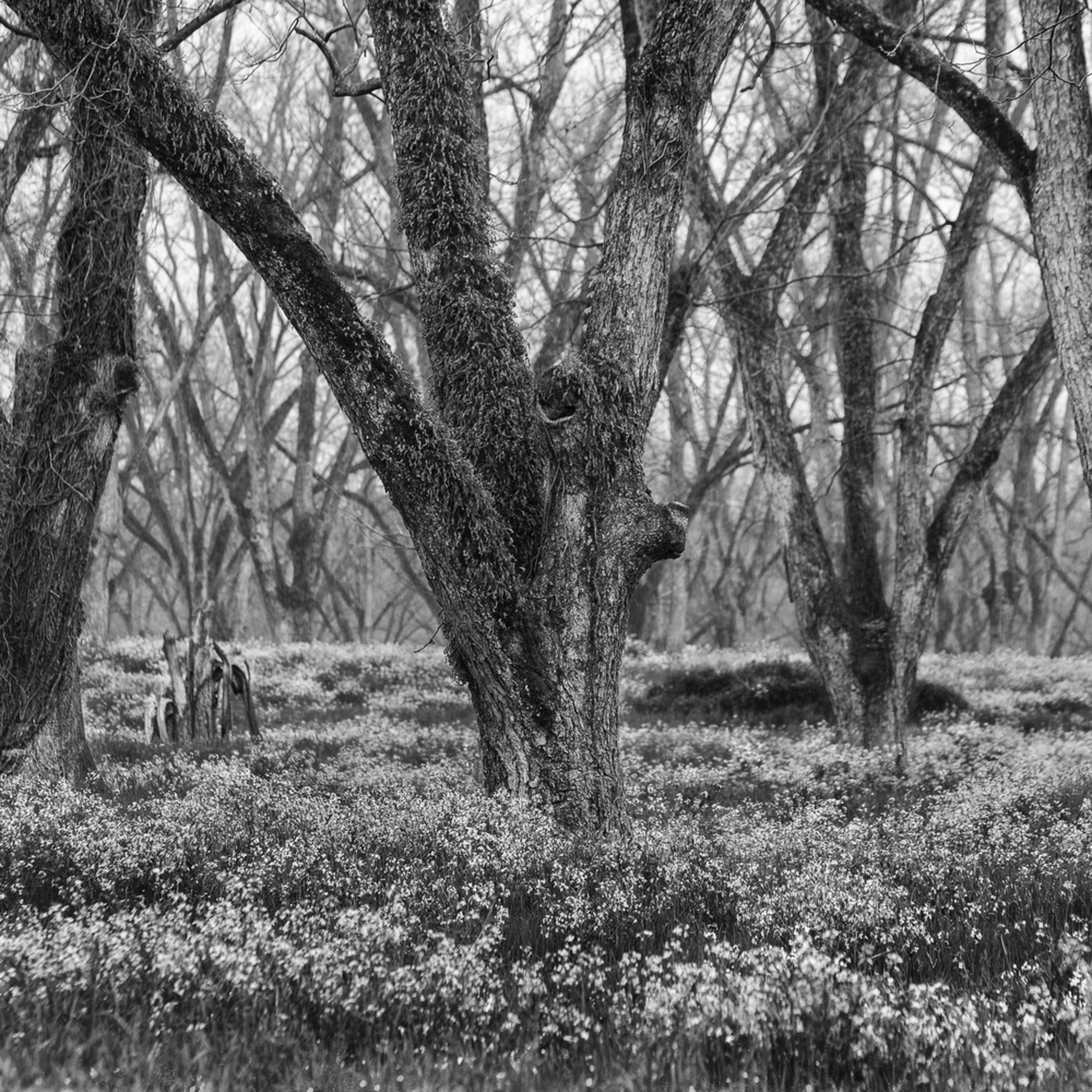 Trees  50 alvxk3