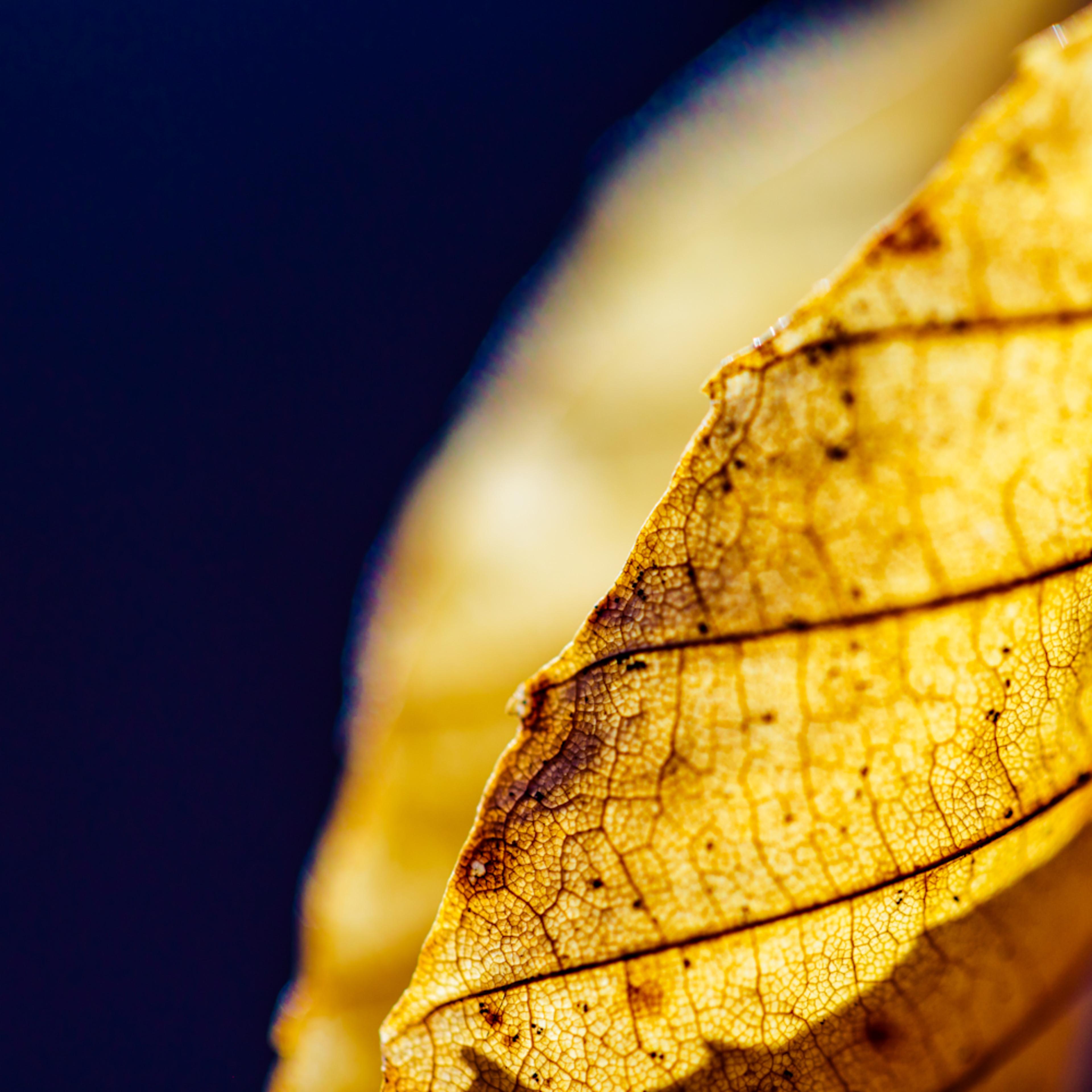 Nature color 5380 xokgpo