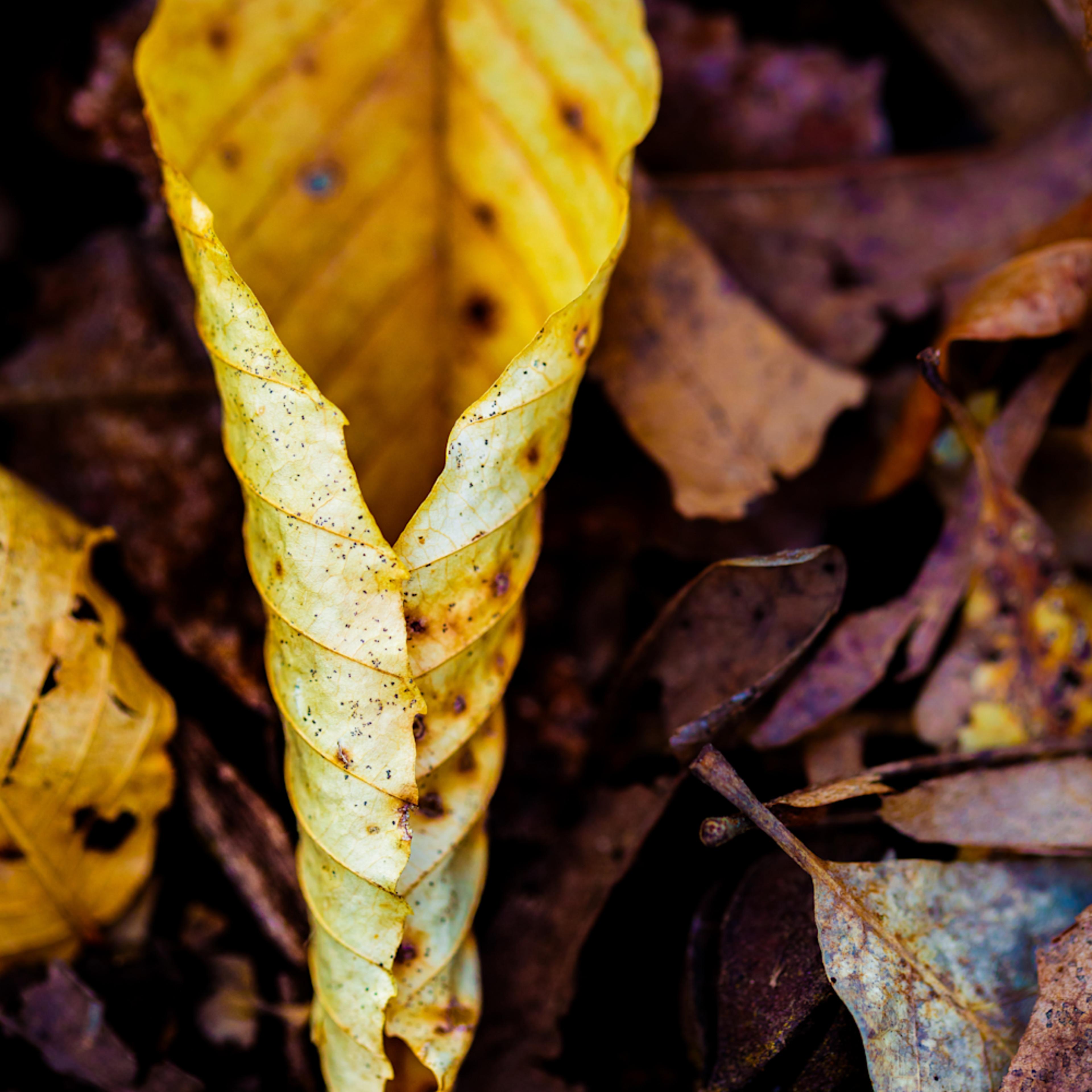 Nature color 5623 qdmryo