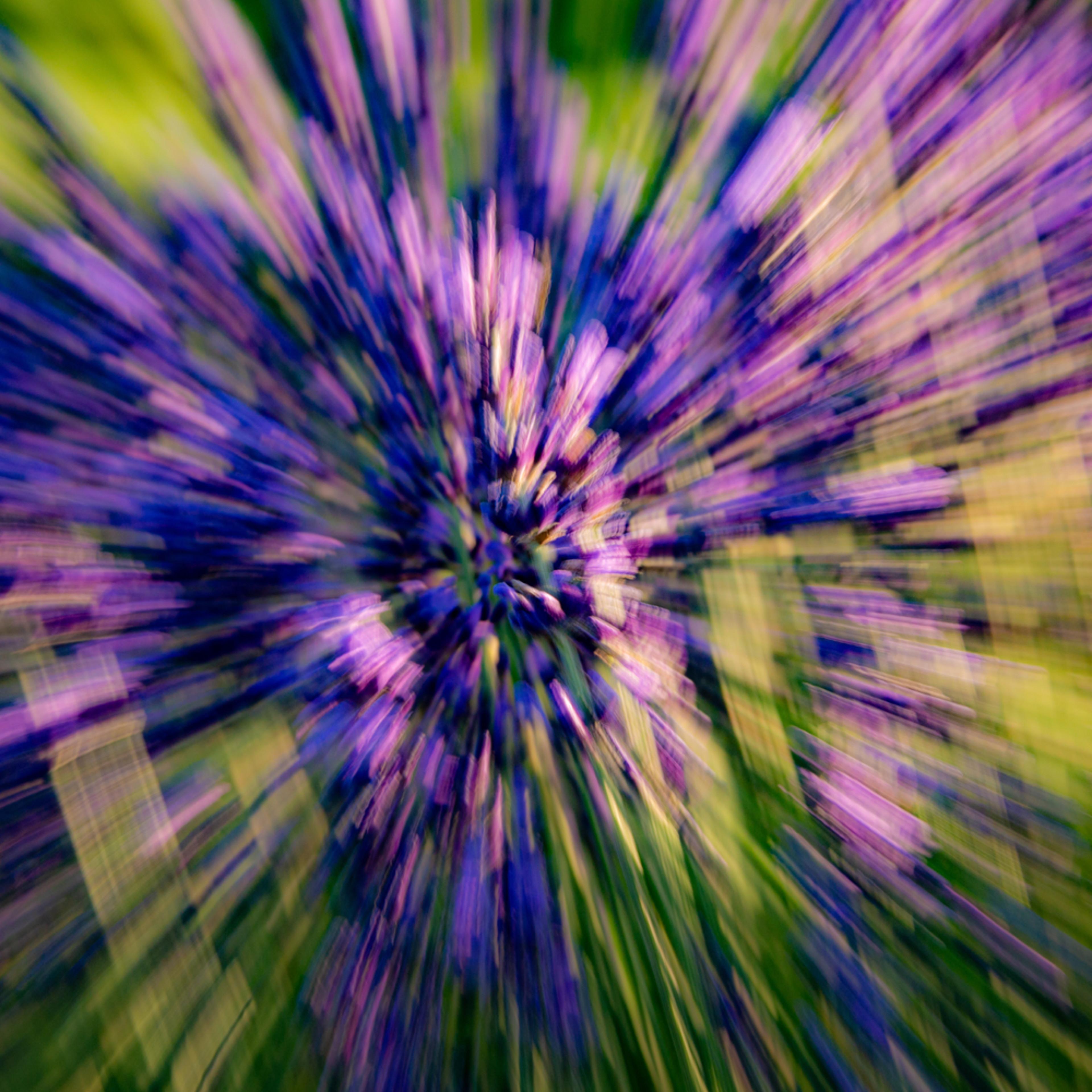 Bursting with lavender pnco8o