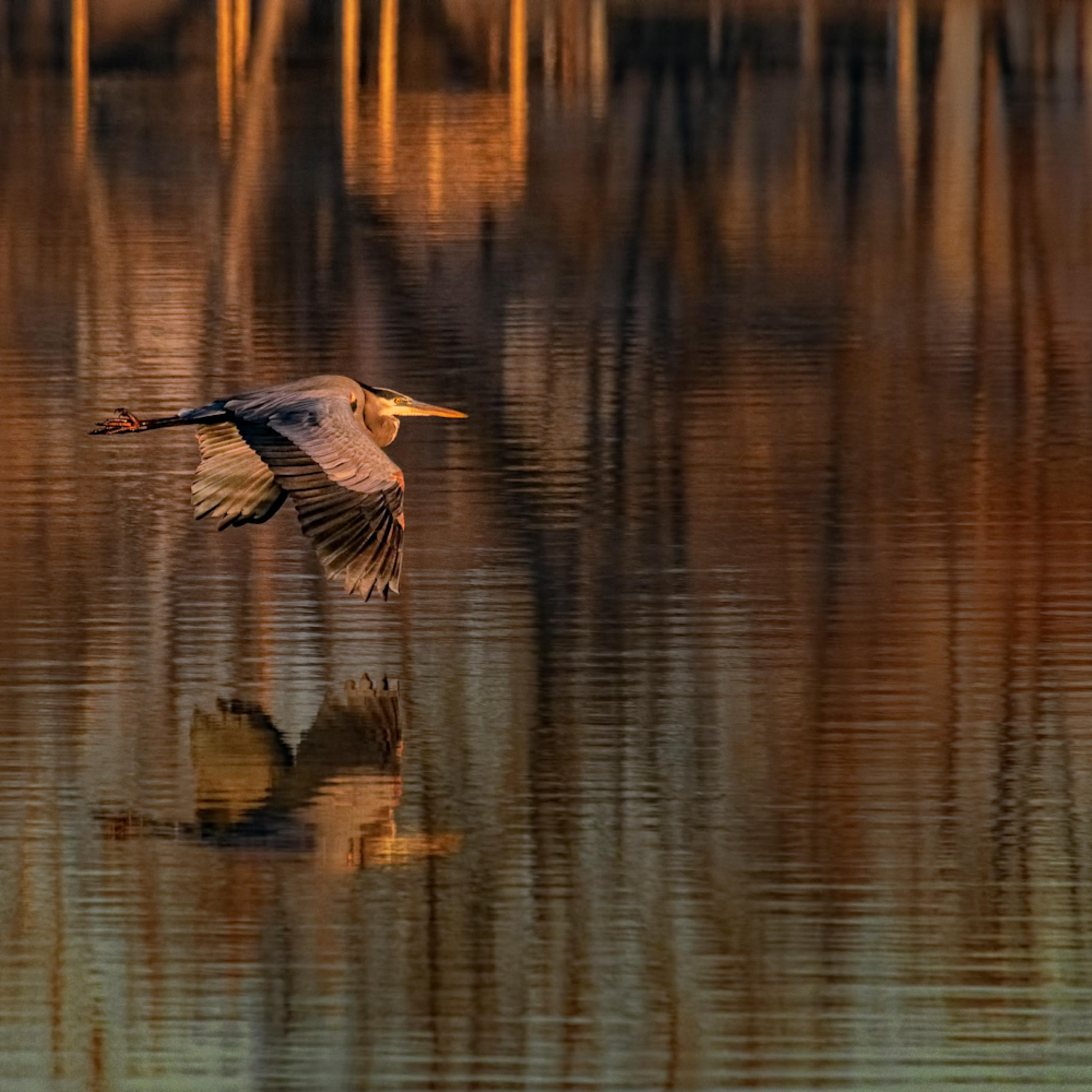 Heronflying kellogglake 0687 fss yczrja