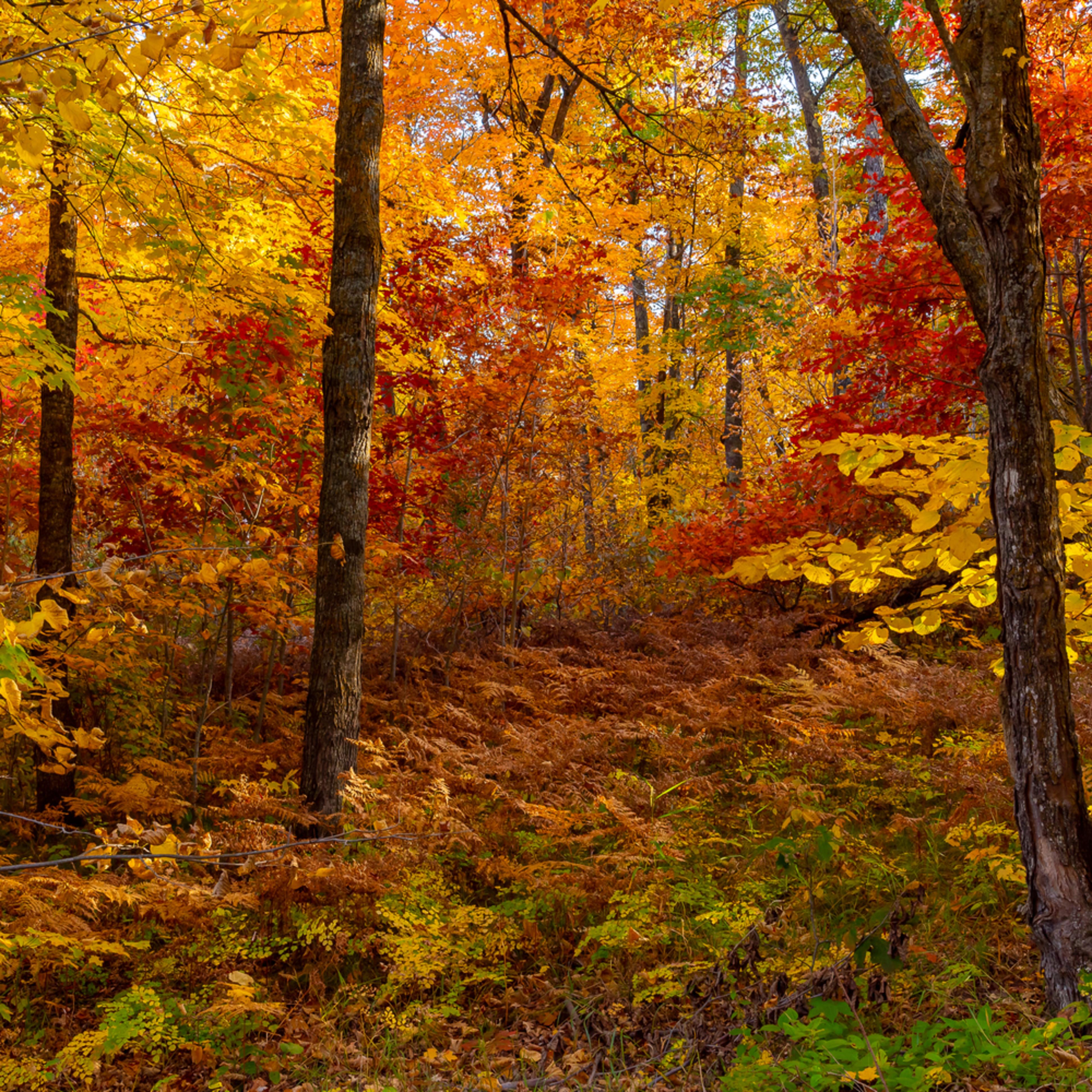 Itasca   autumn forest b lndpdv