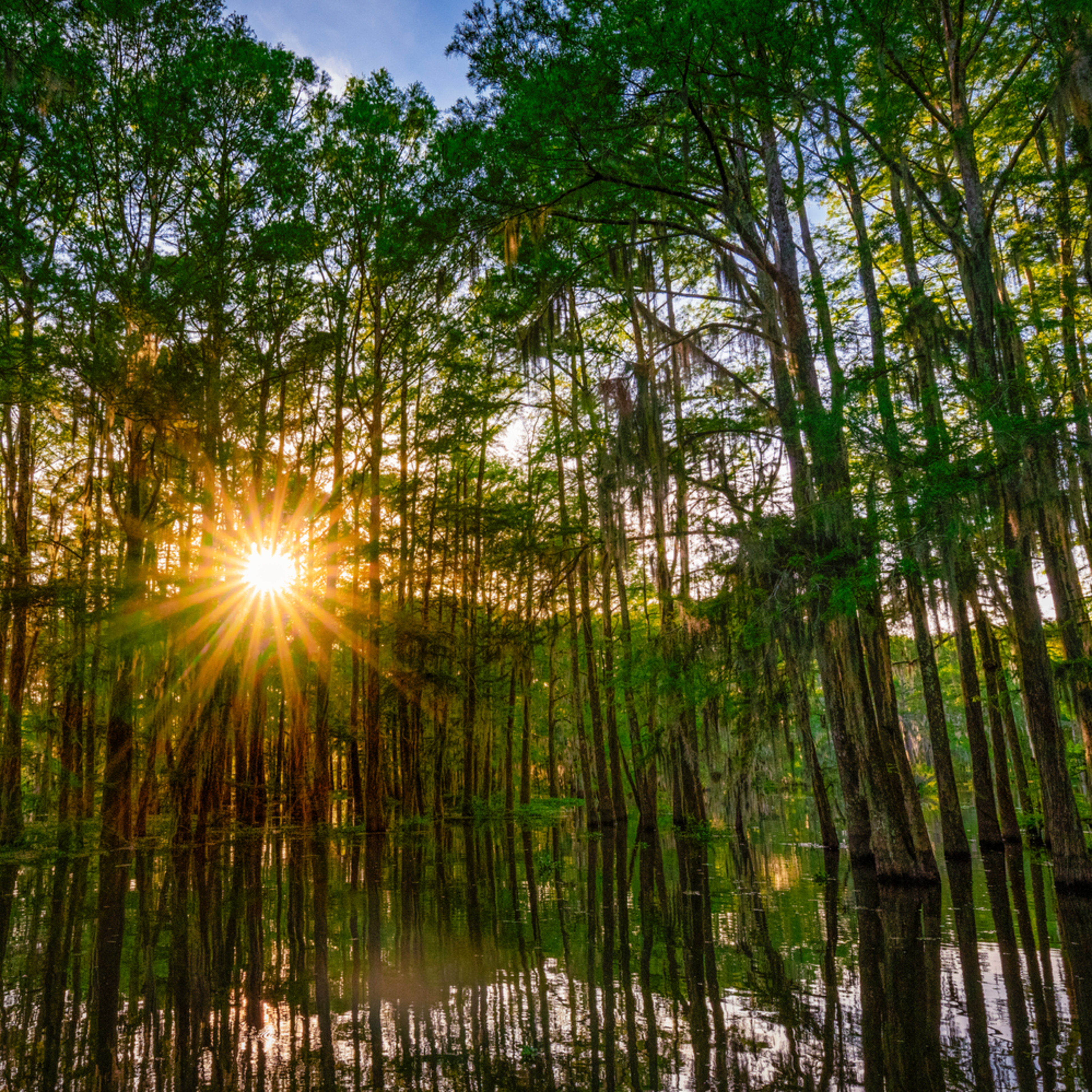 Andy crawford photography shining through the swamp pjpdzs