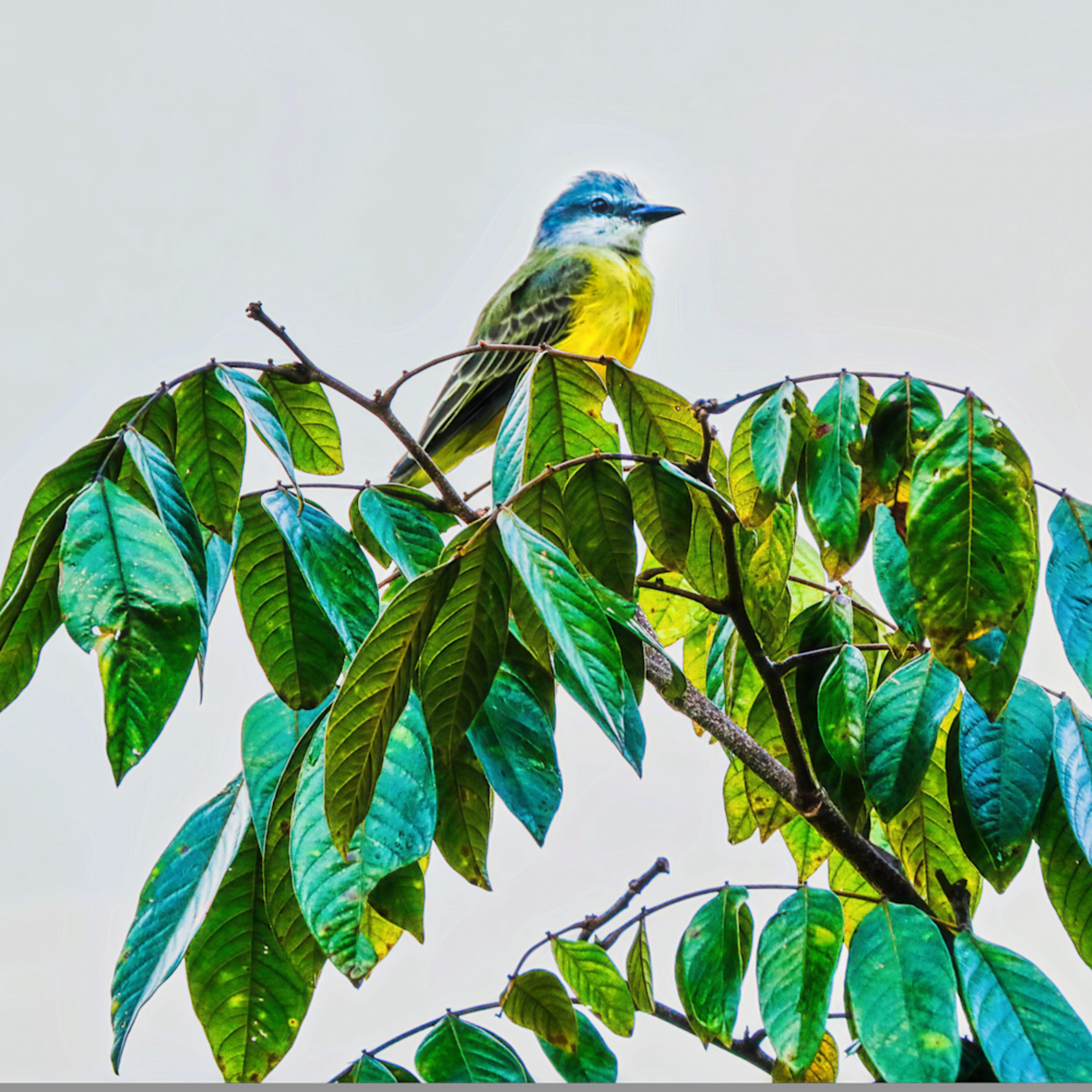 Birds 6259 35 wxcseu