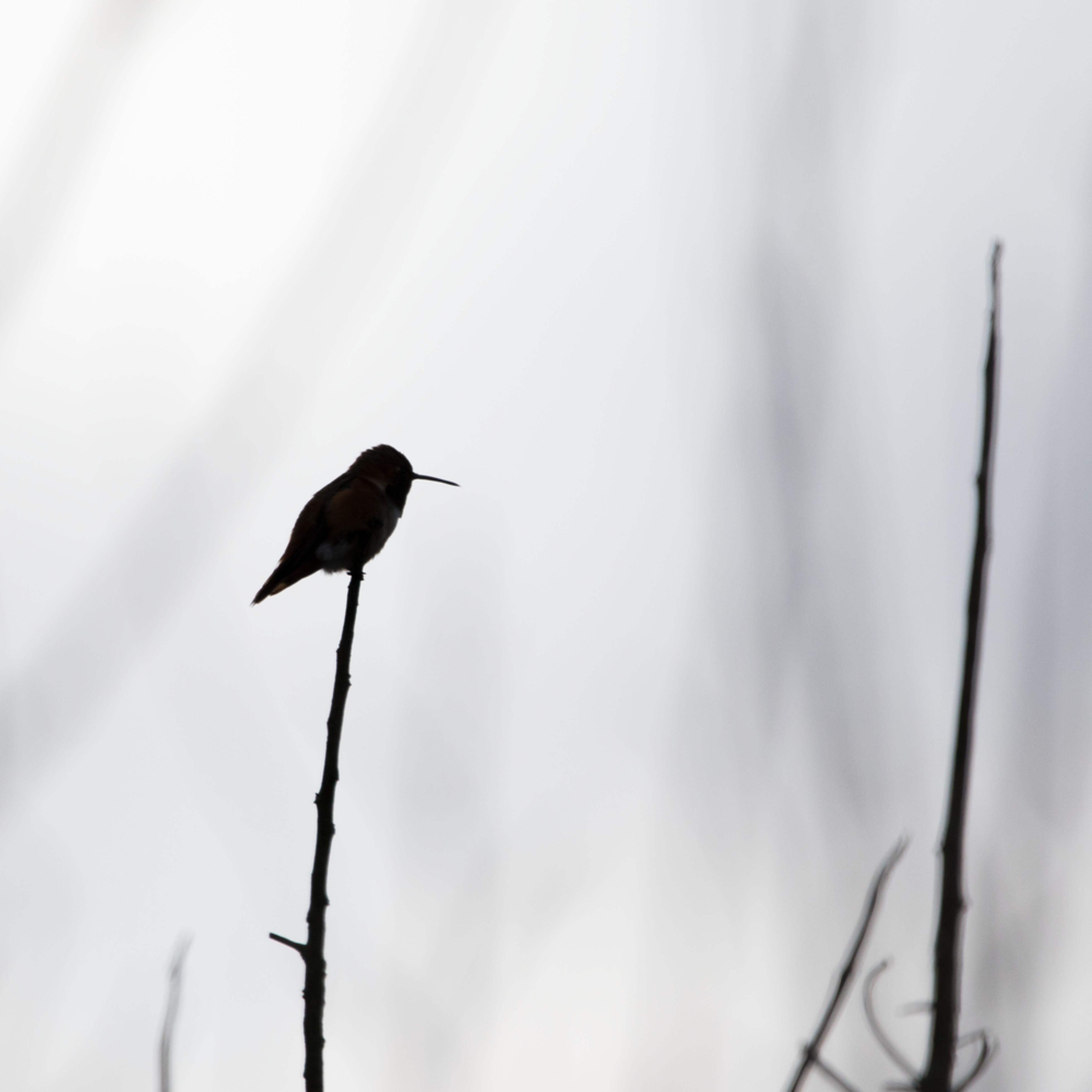 Bird silouette lesc3n