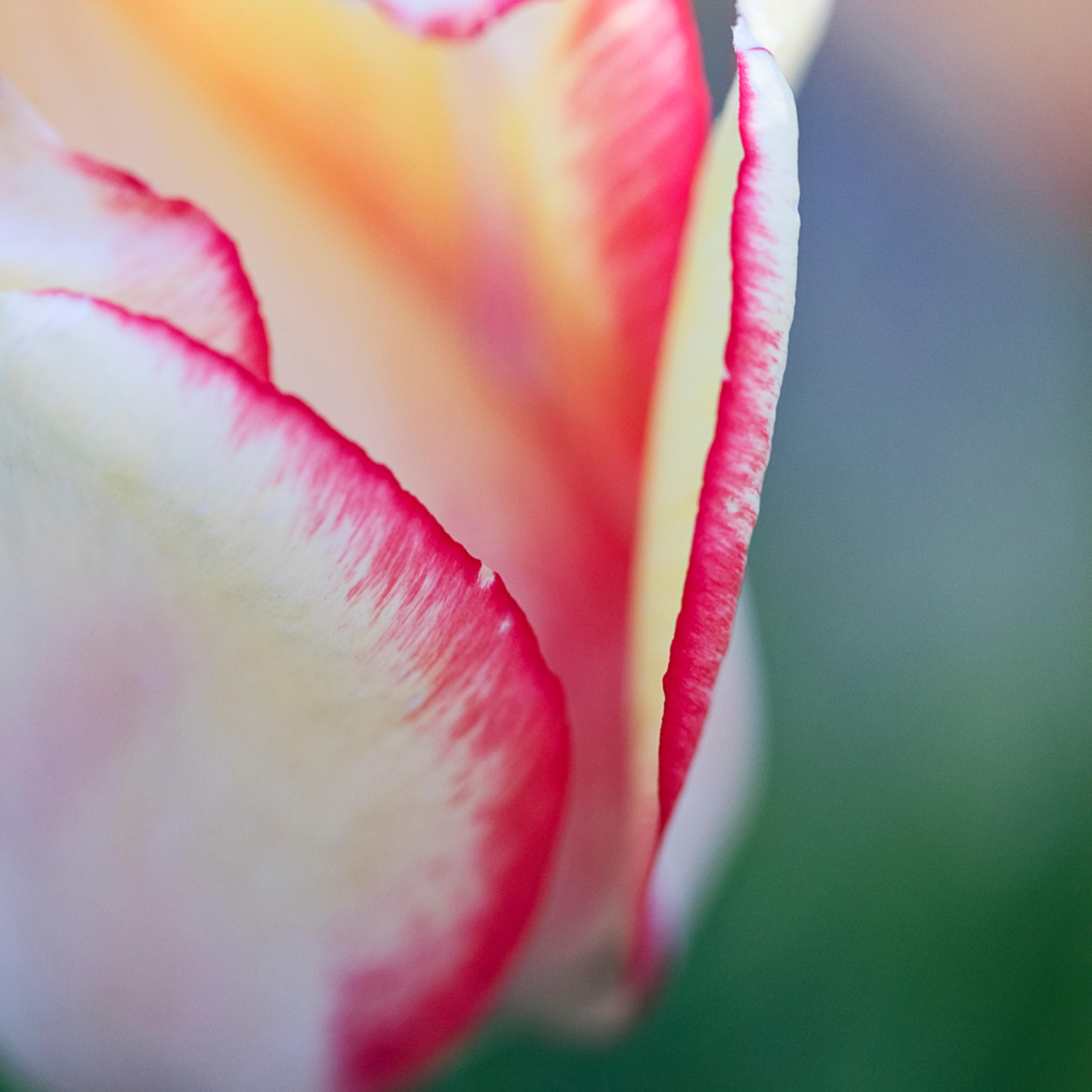 Wicked tulips farm johnston ri 20170503 3723 ual0oz