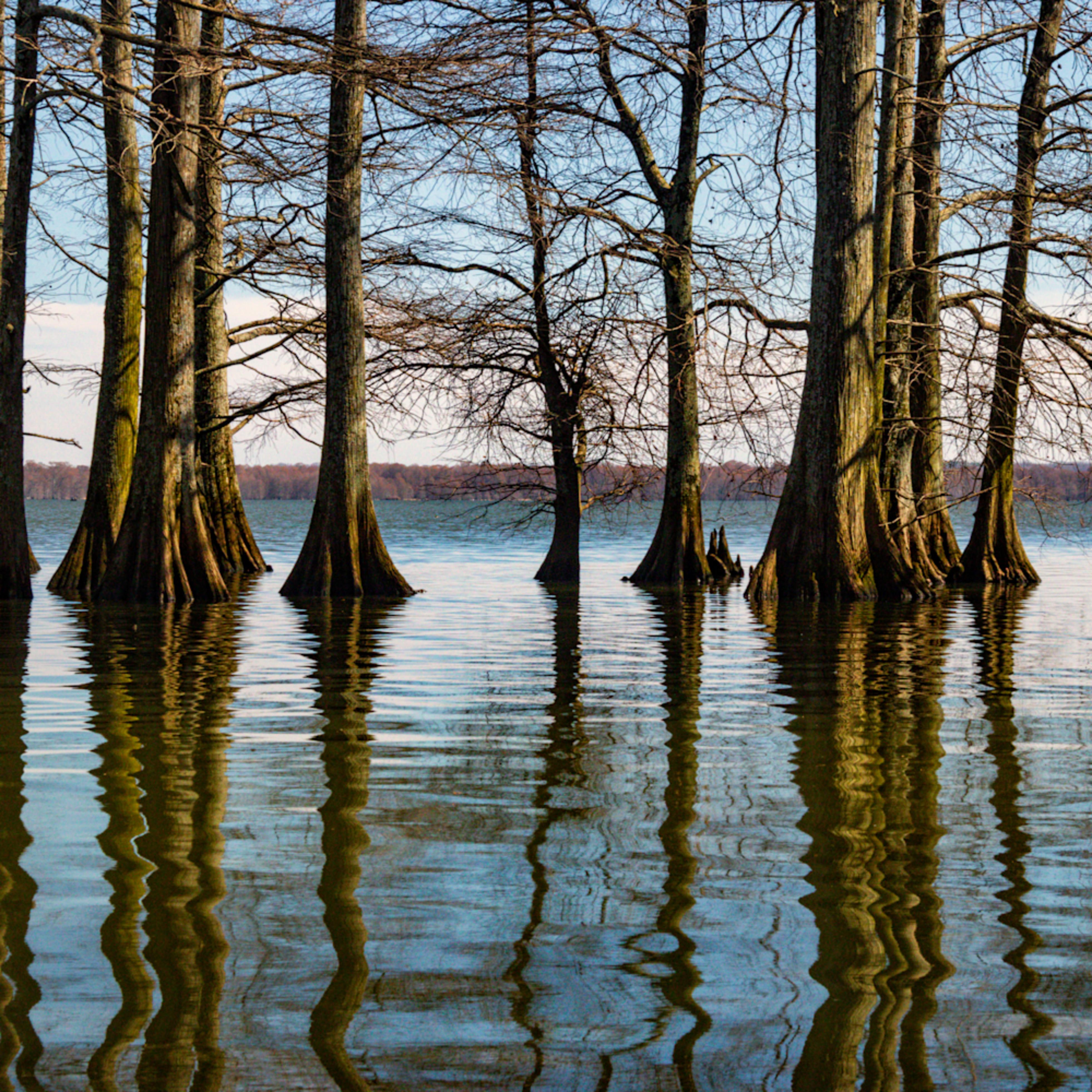 Cypress trees reflection 5490fs healthcare art kcbszn