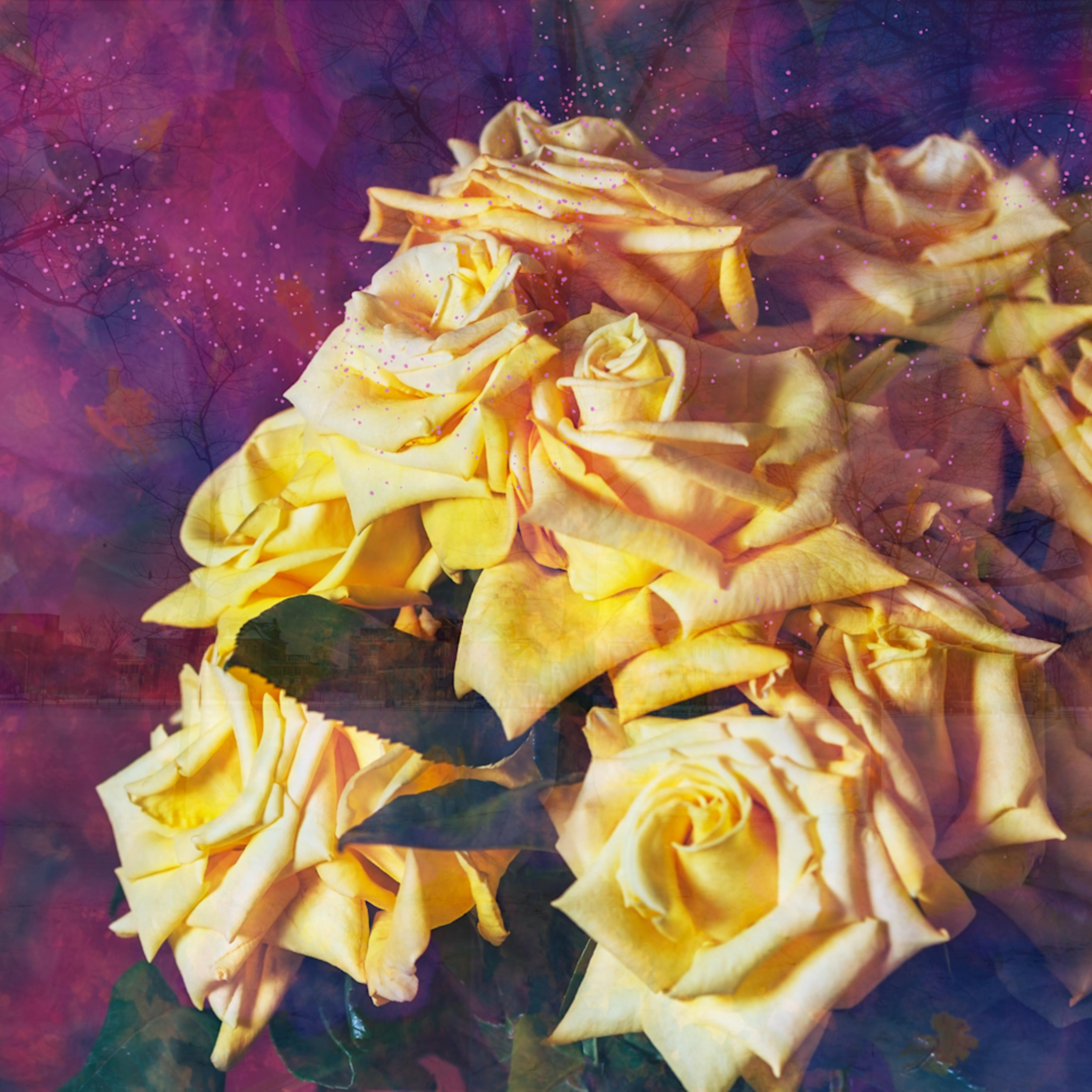 Yellow rose 0003compfv2 wadwmu