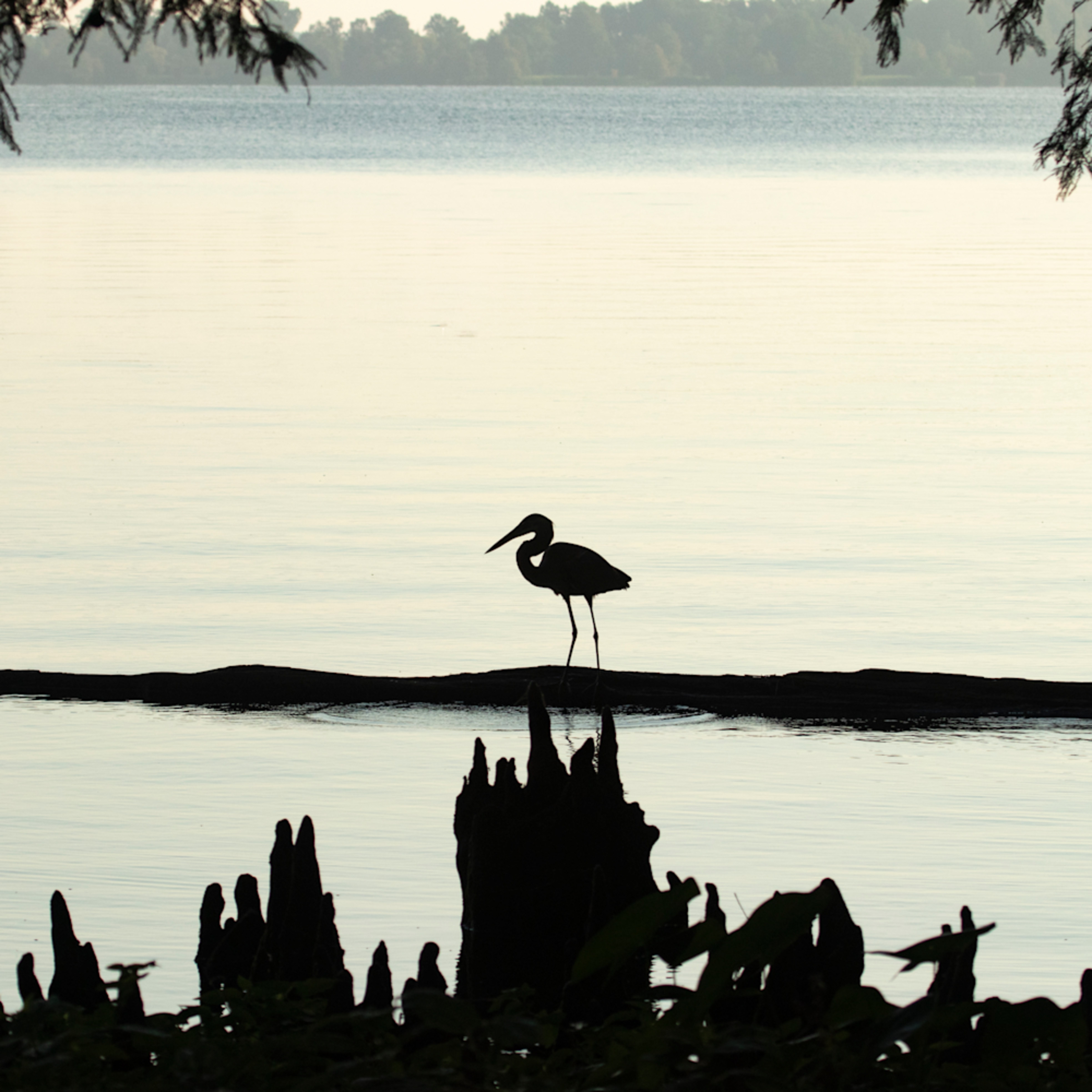 Heron silhouettes mg 7514 srm20 uvoe0f