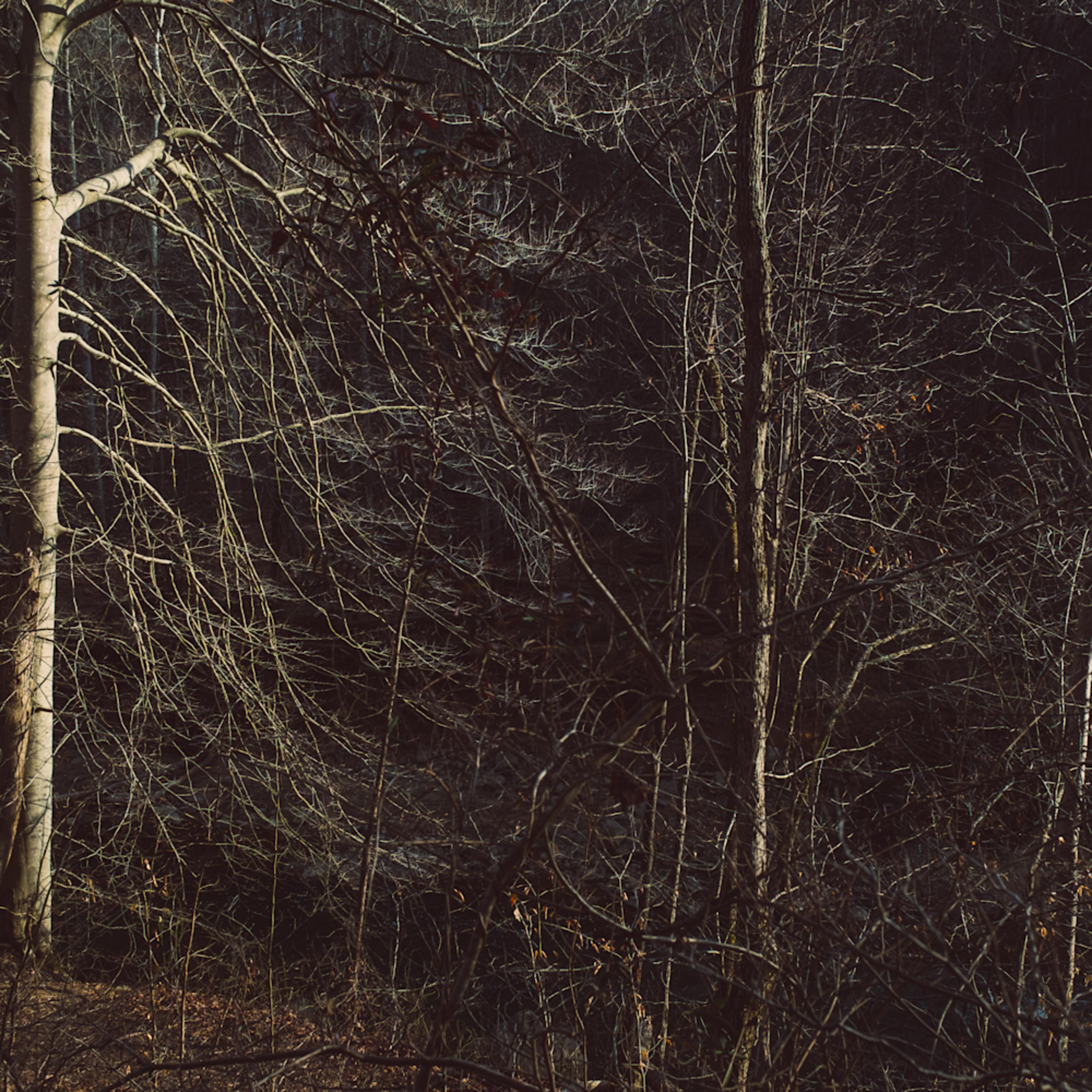 Nature color 8401 azapjb