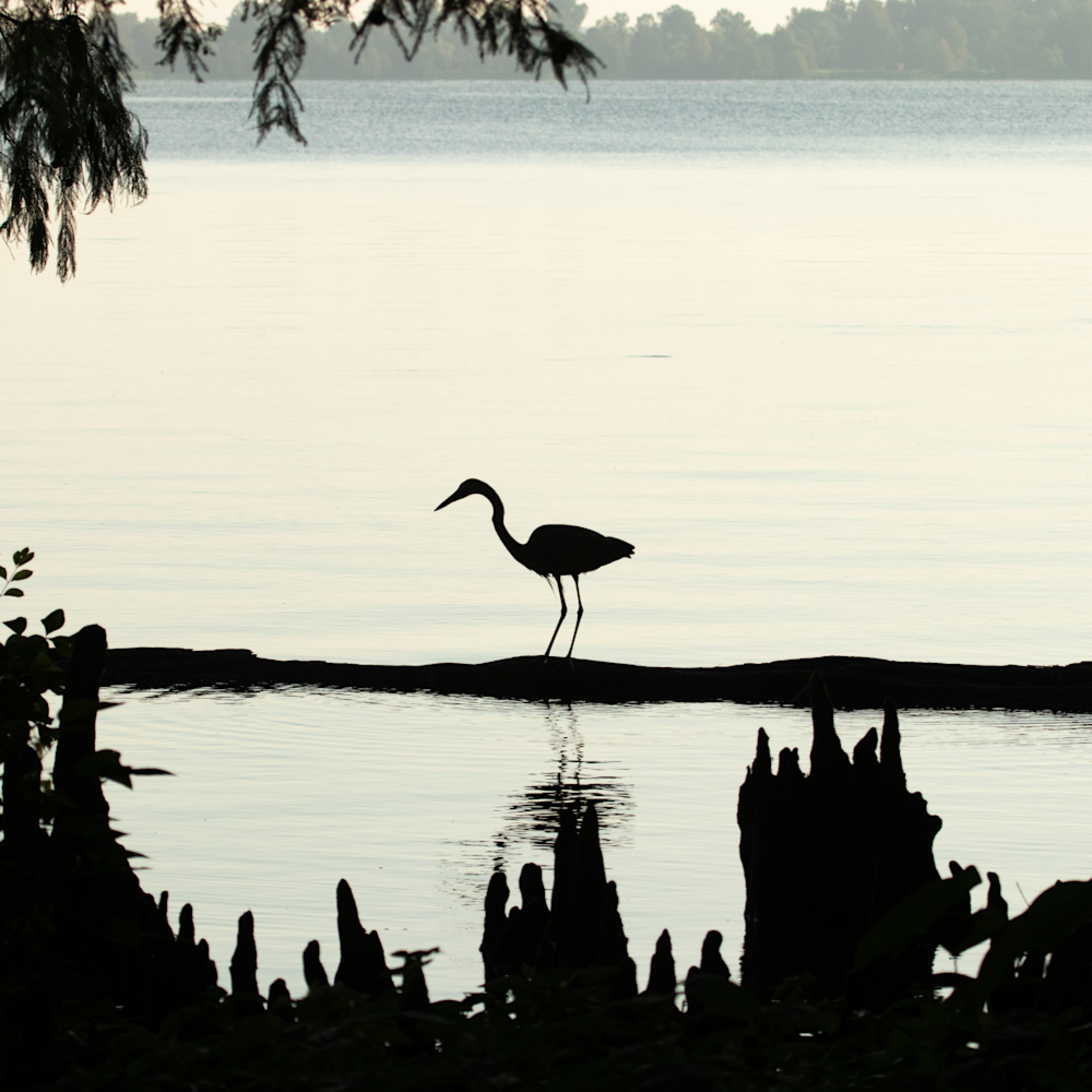 Heron silhouettes mg 7517 srm20 eudr3a