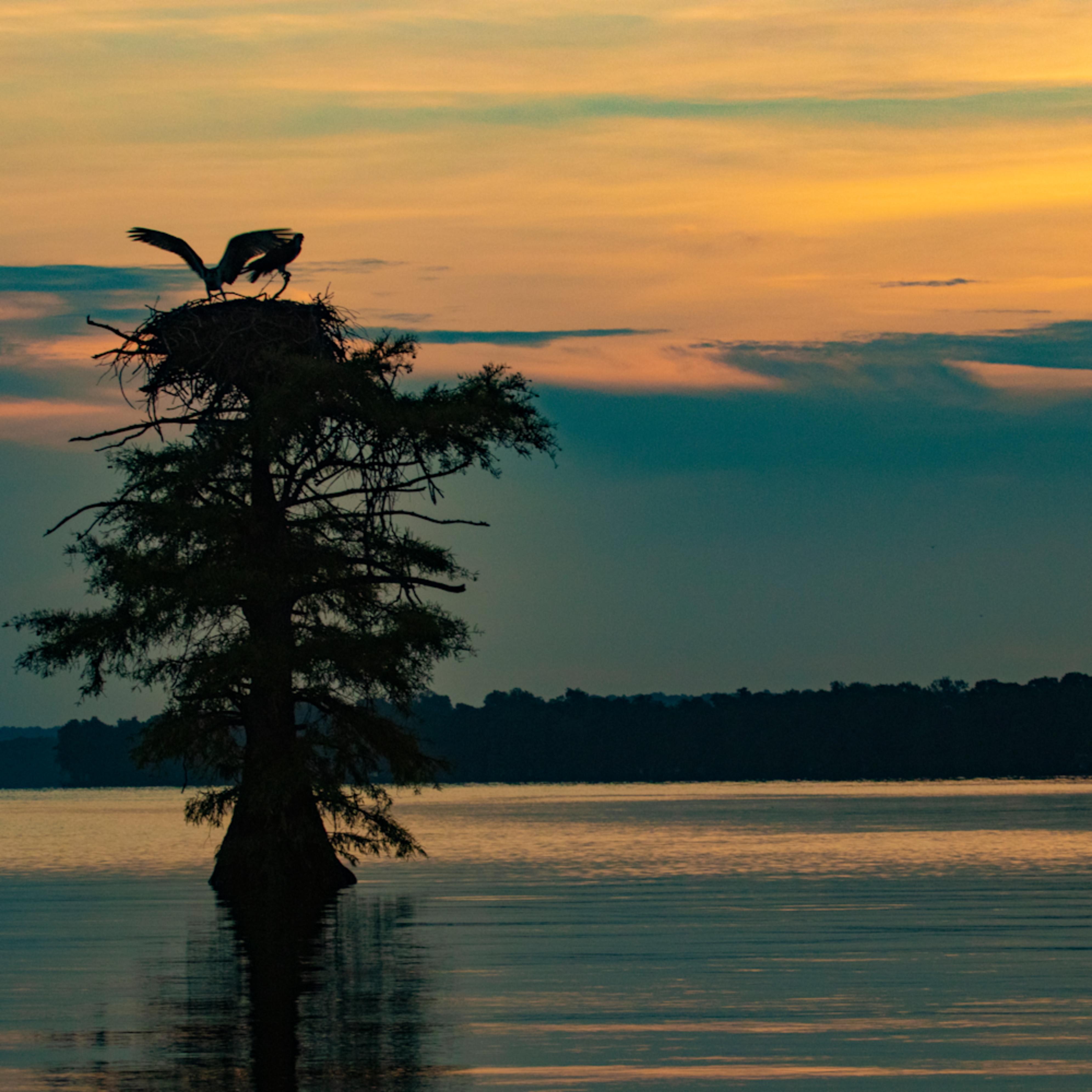 Osprey nest wings sunrise v2 mg 9117 rlt20 ltprhg