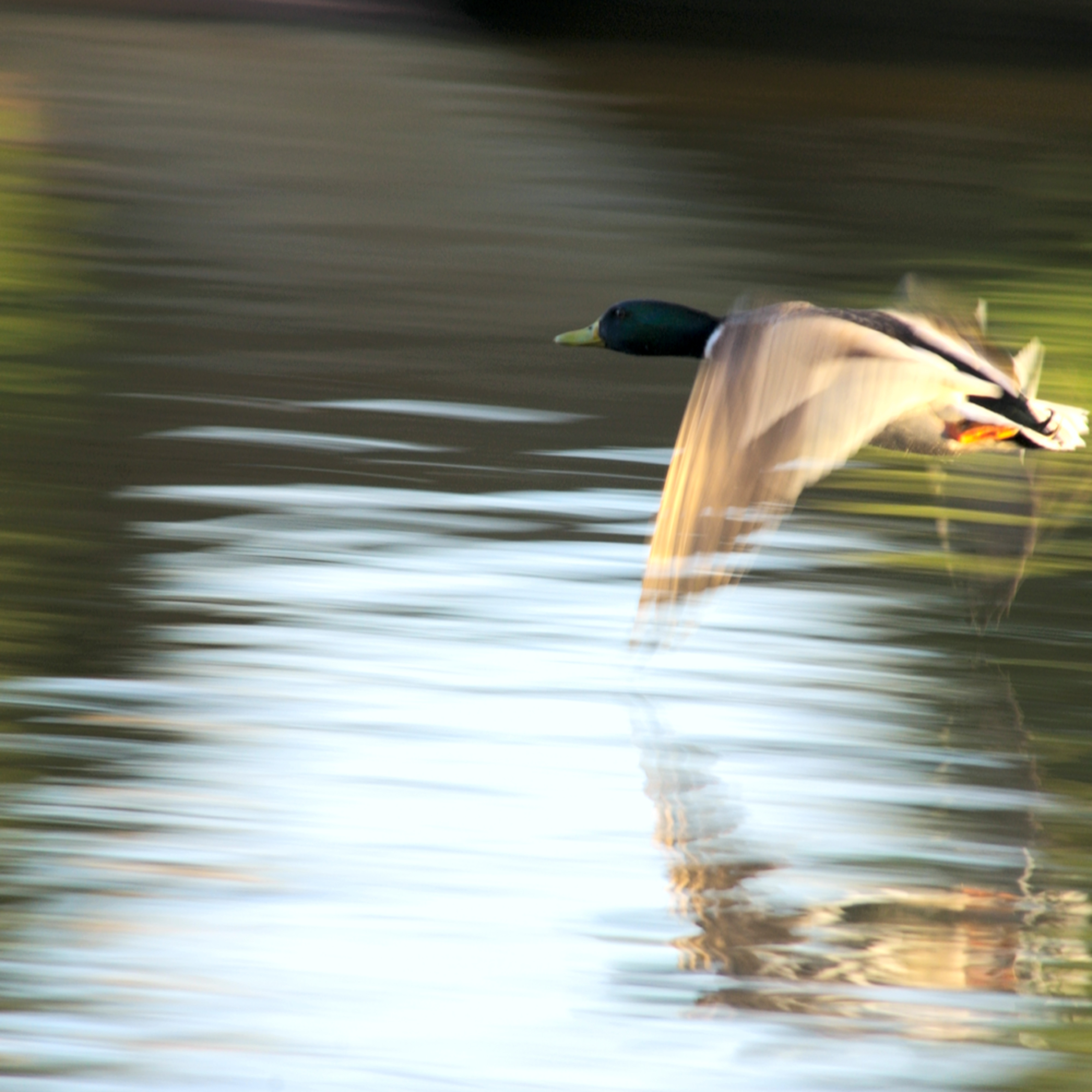 Taking flight gvbcvj