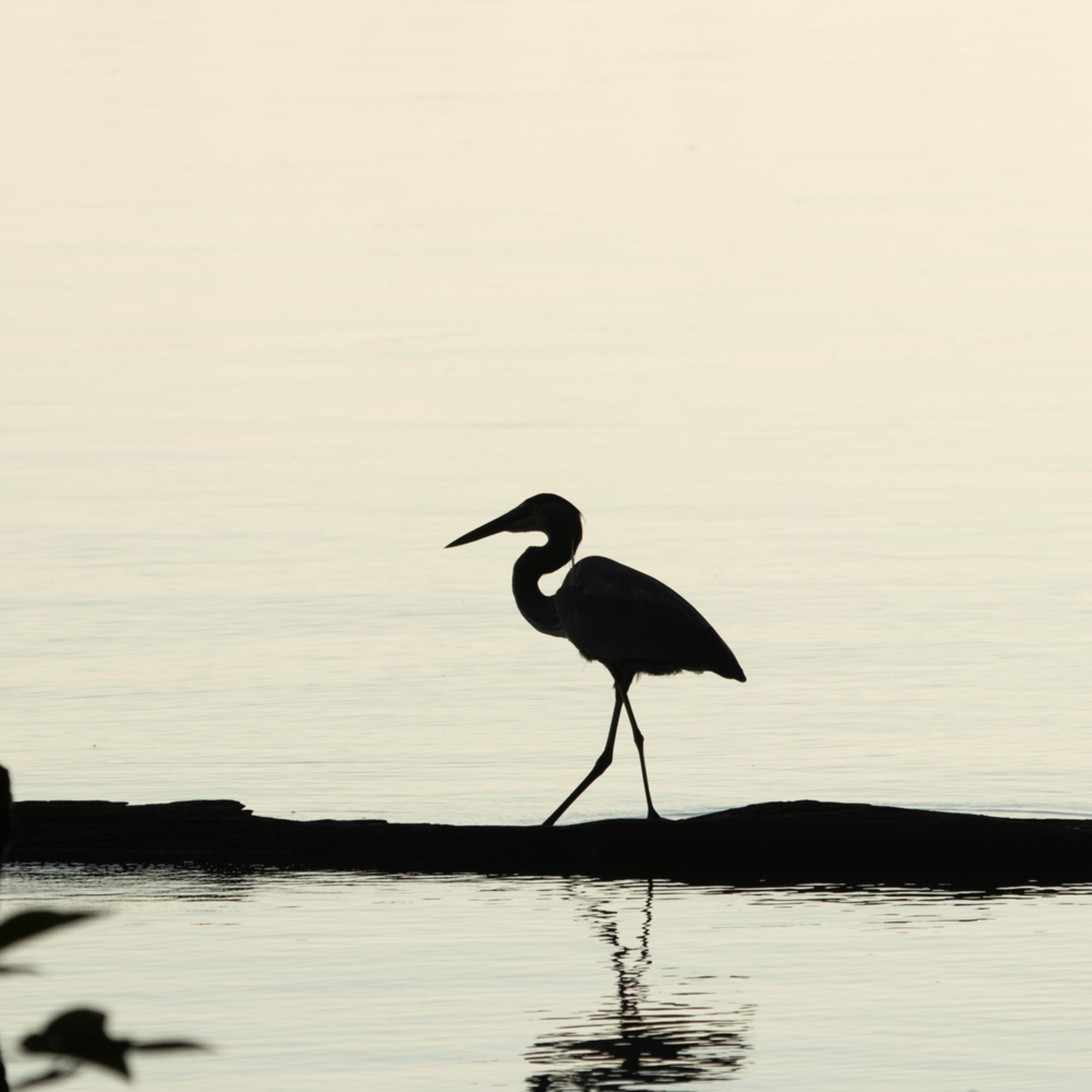 Heron silhouettes mg 7524 srm20 r6i99k