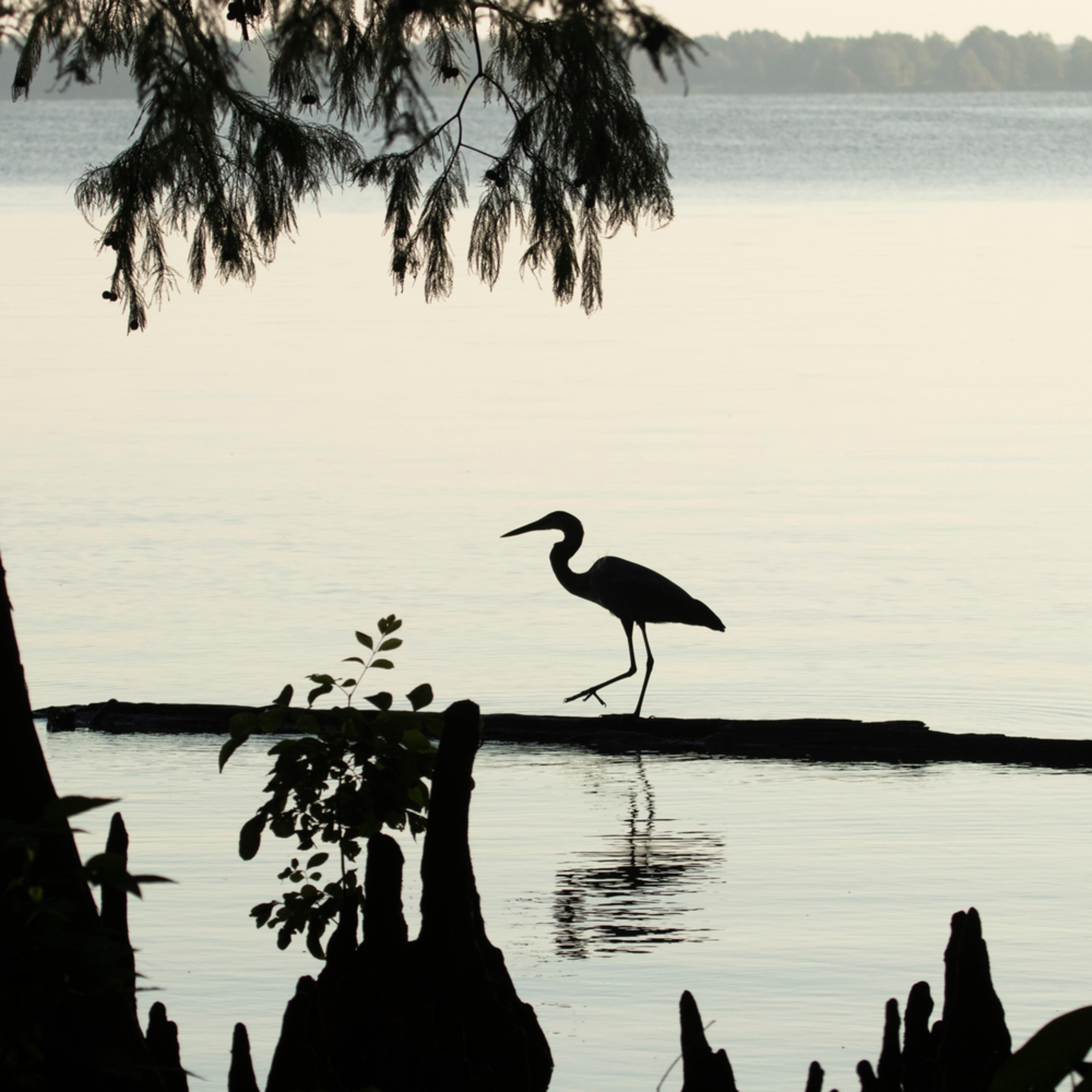 Heron silhouettes mg 7528 srm20 bg17ly