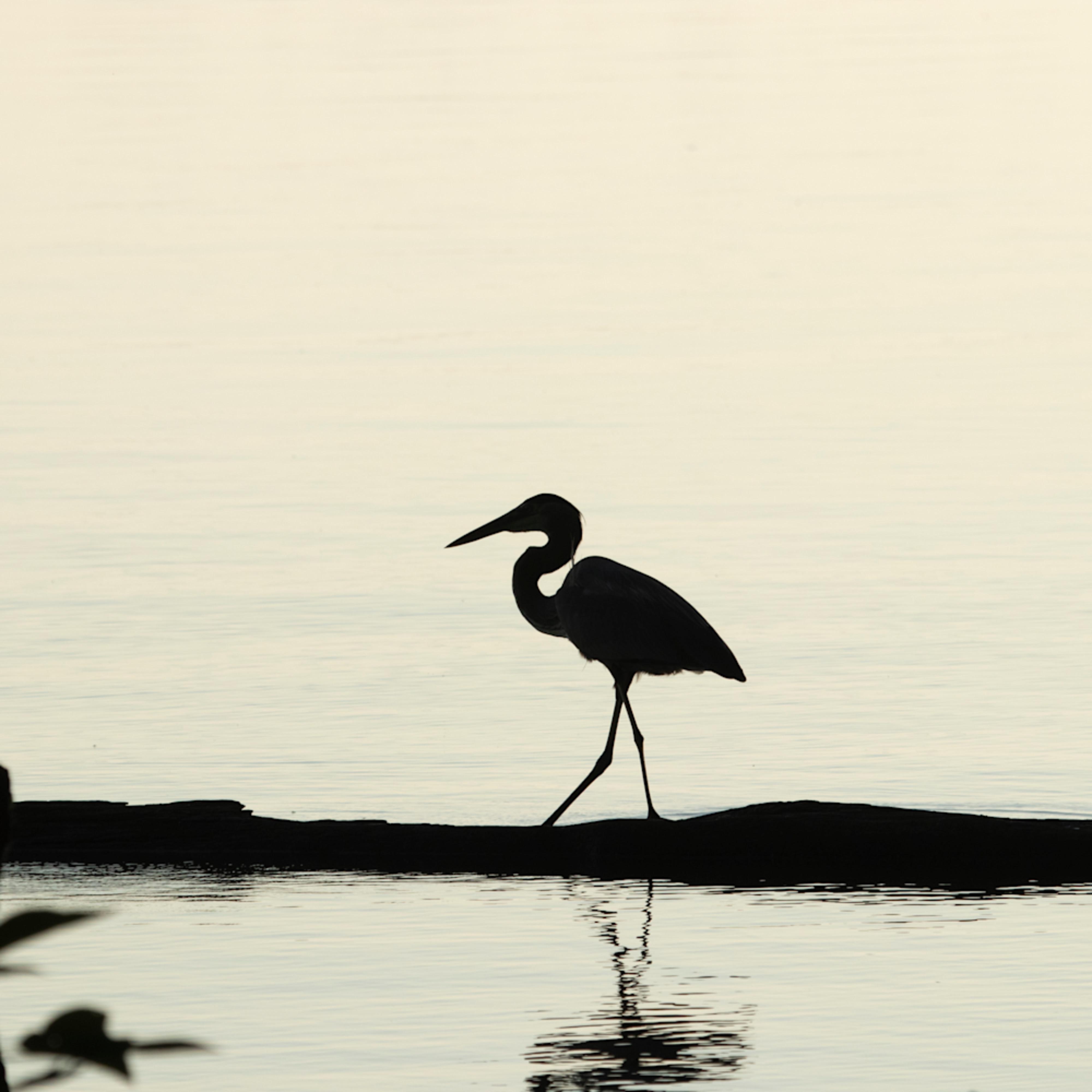 Heron silhouettes mg 7524 srm20 dykbno