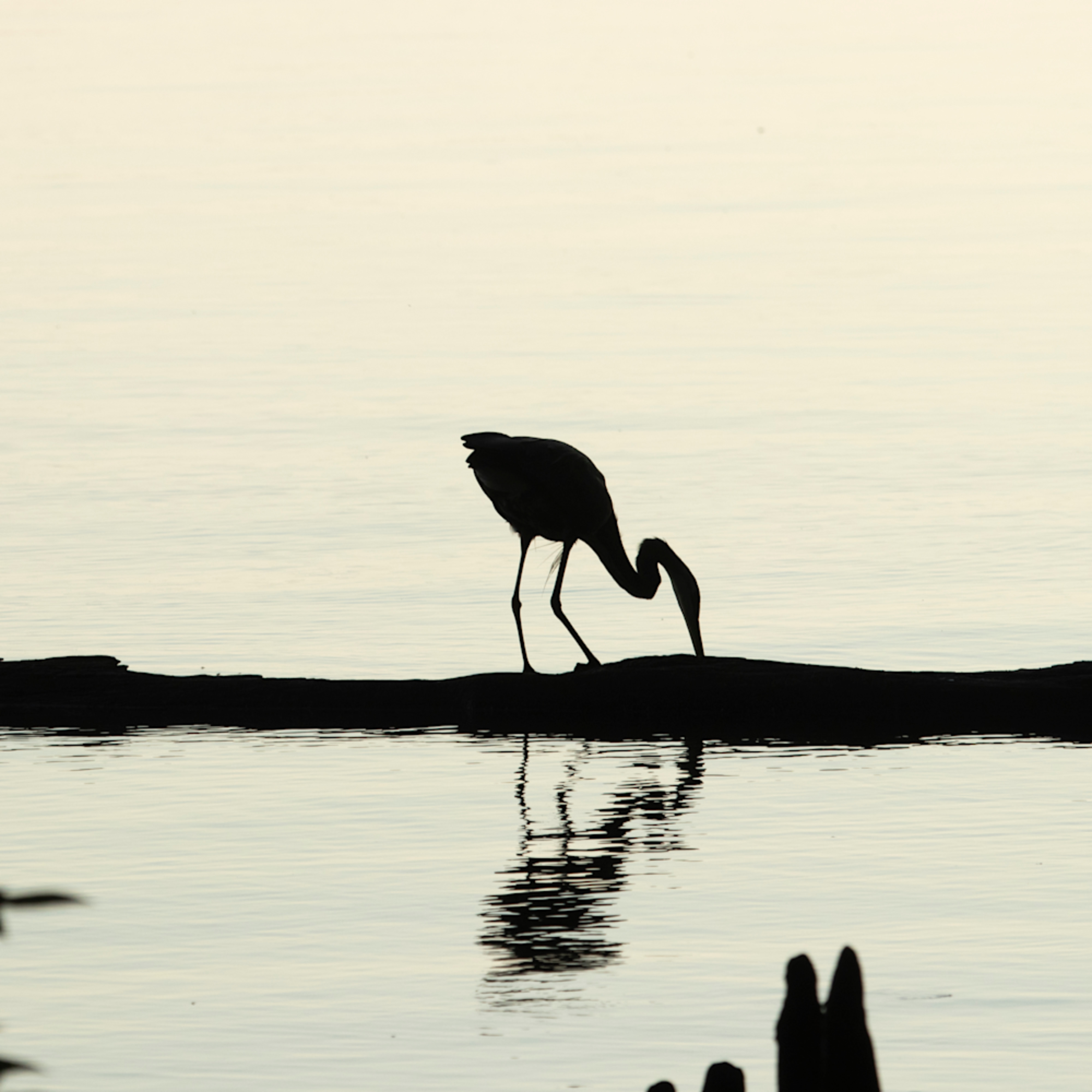 Heron silhouettes mg 7522 srm20 ud0zh8