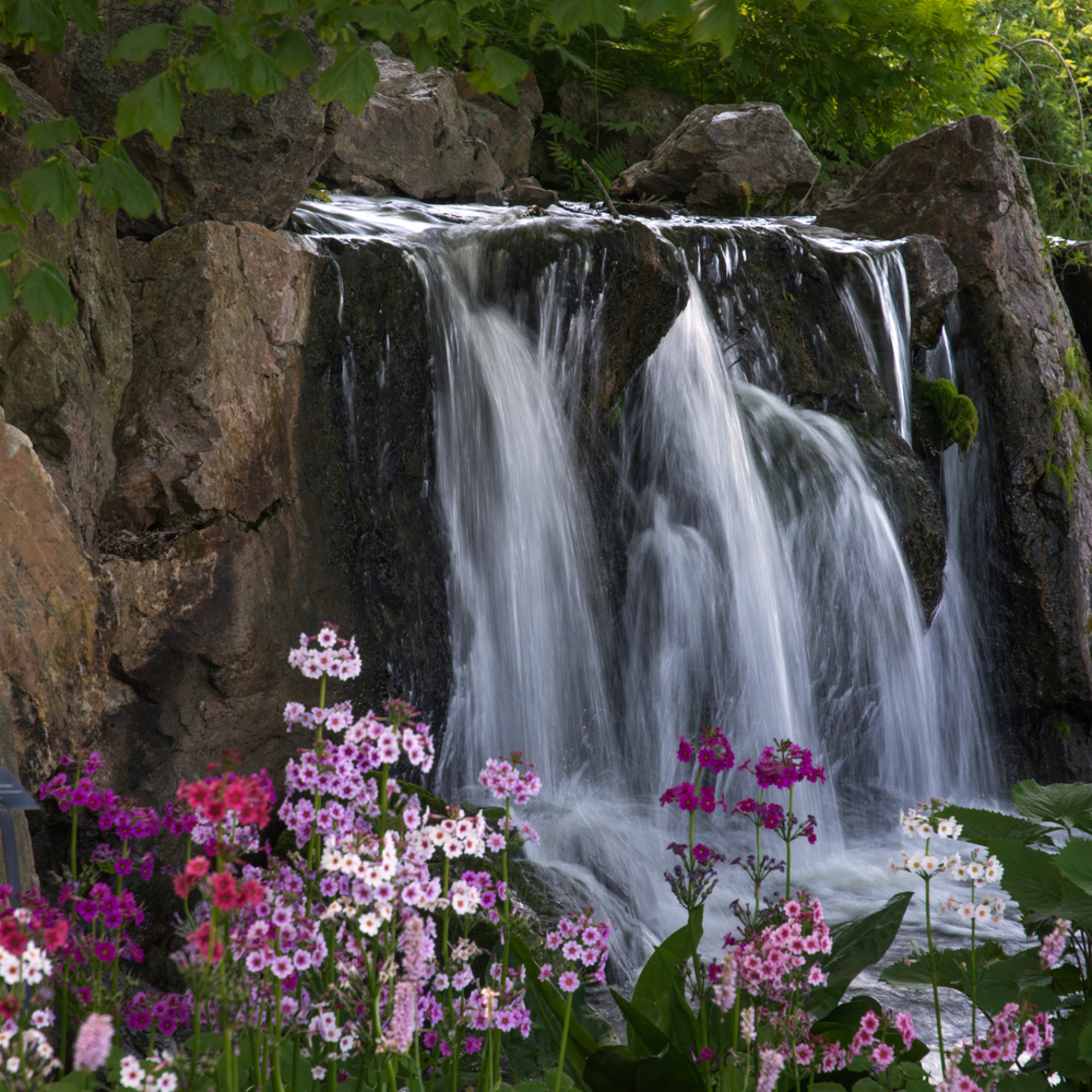 170528 botanic gardens 167 1 trw0jr