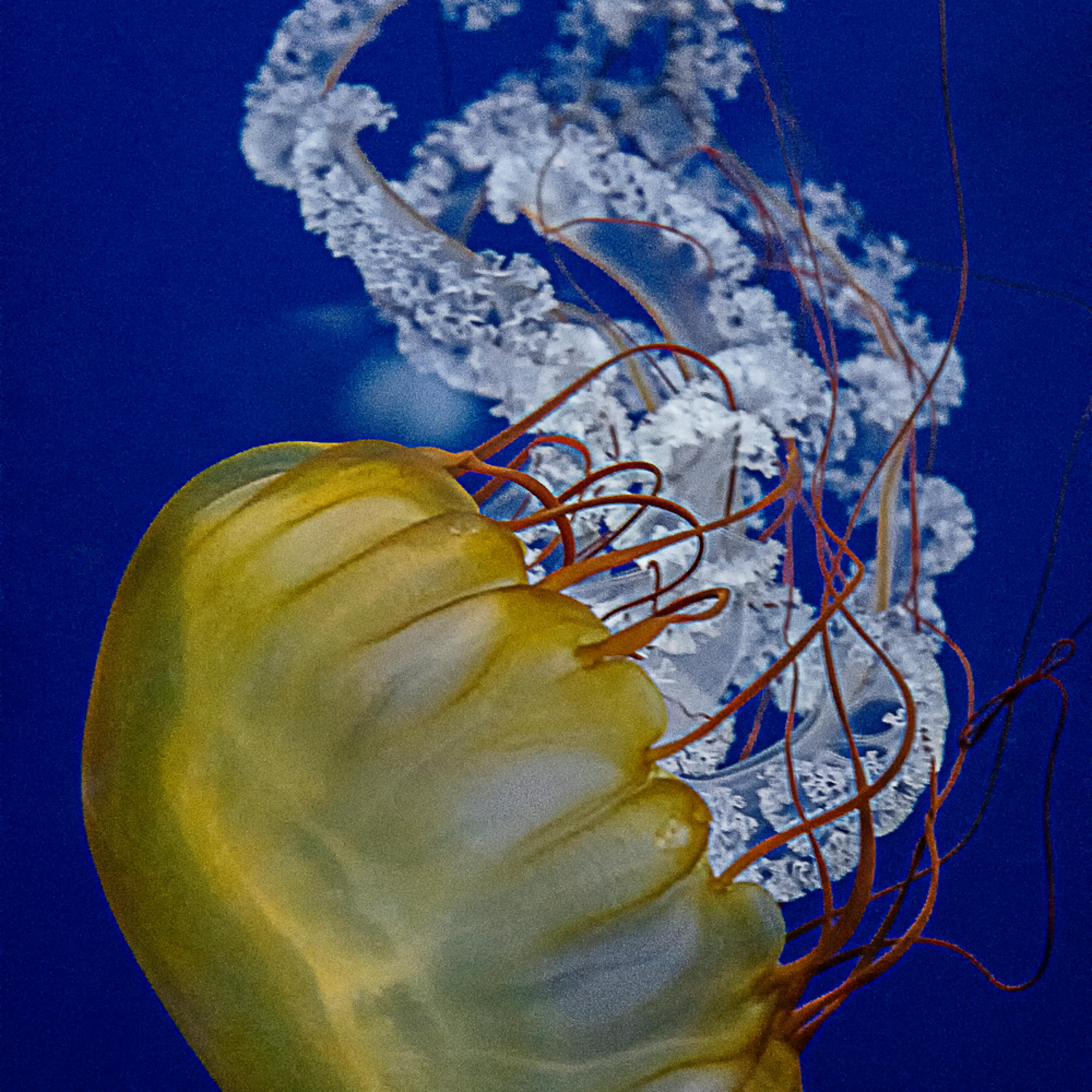 200228 aquarium 095 dfine bvpv02
