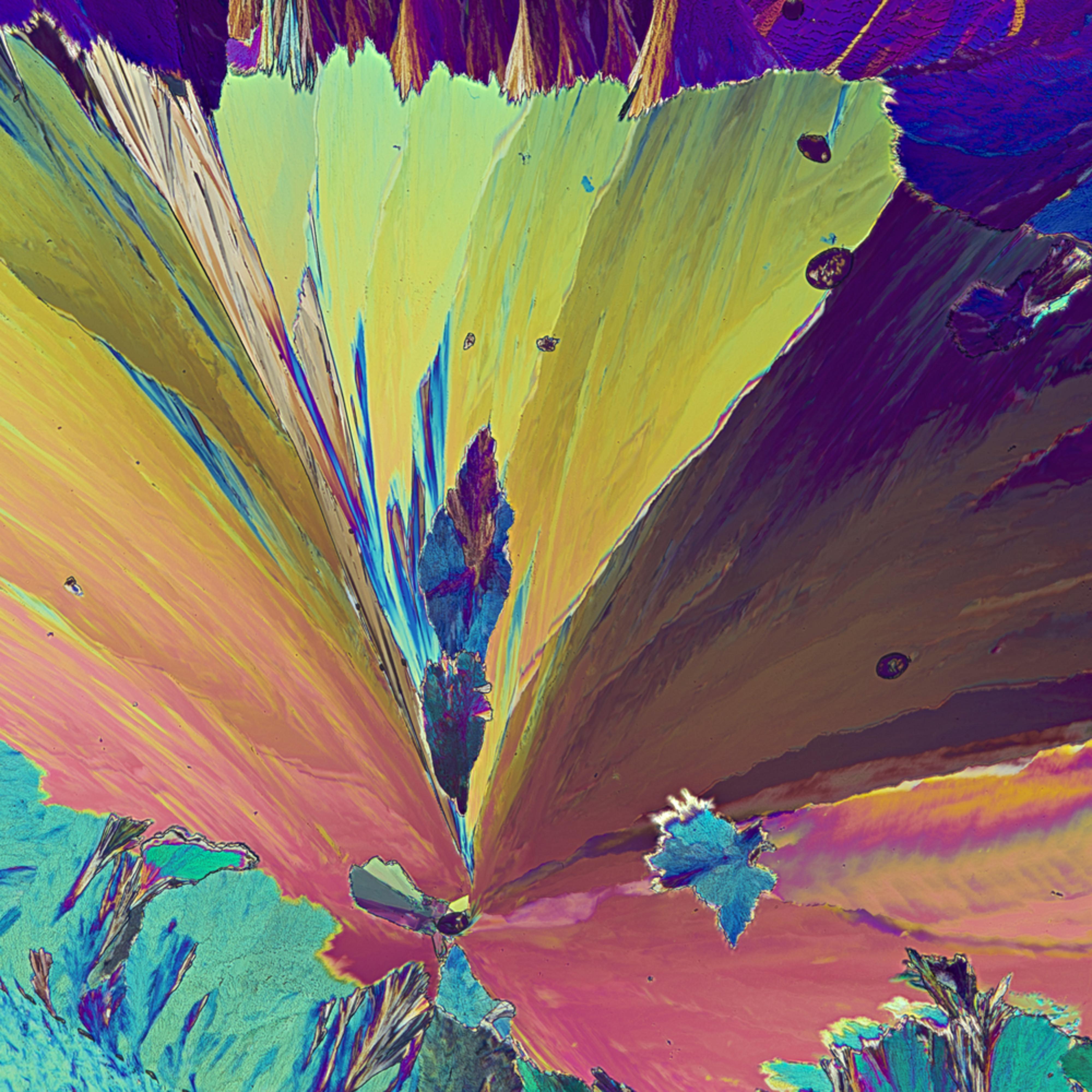 Sweet floral rksopq