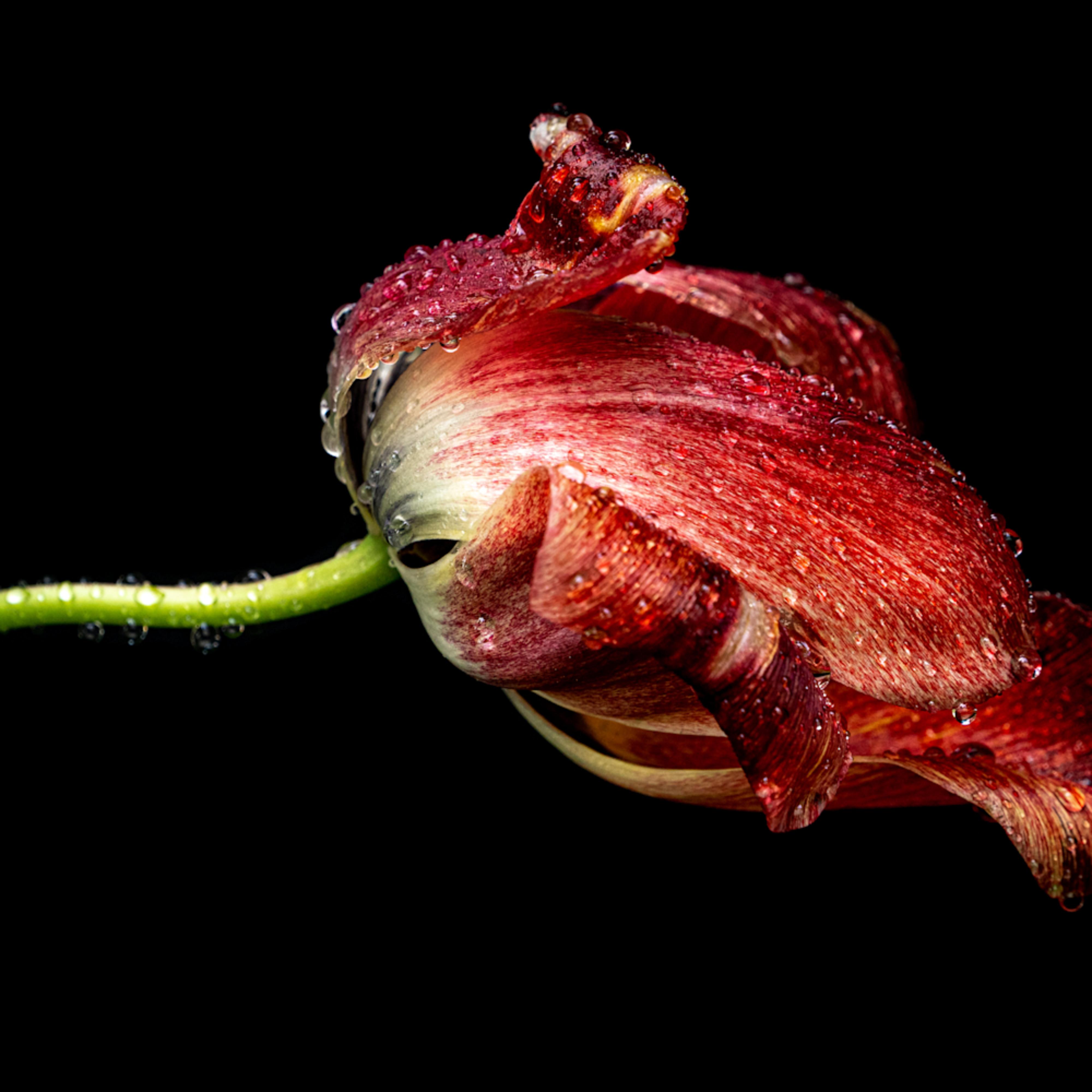 Twp flowers 20200525 0001 dtiudp