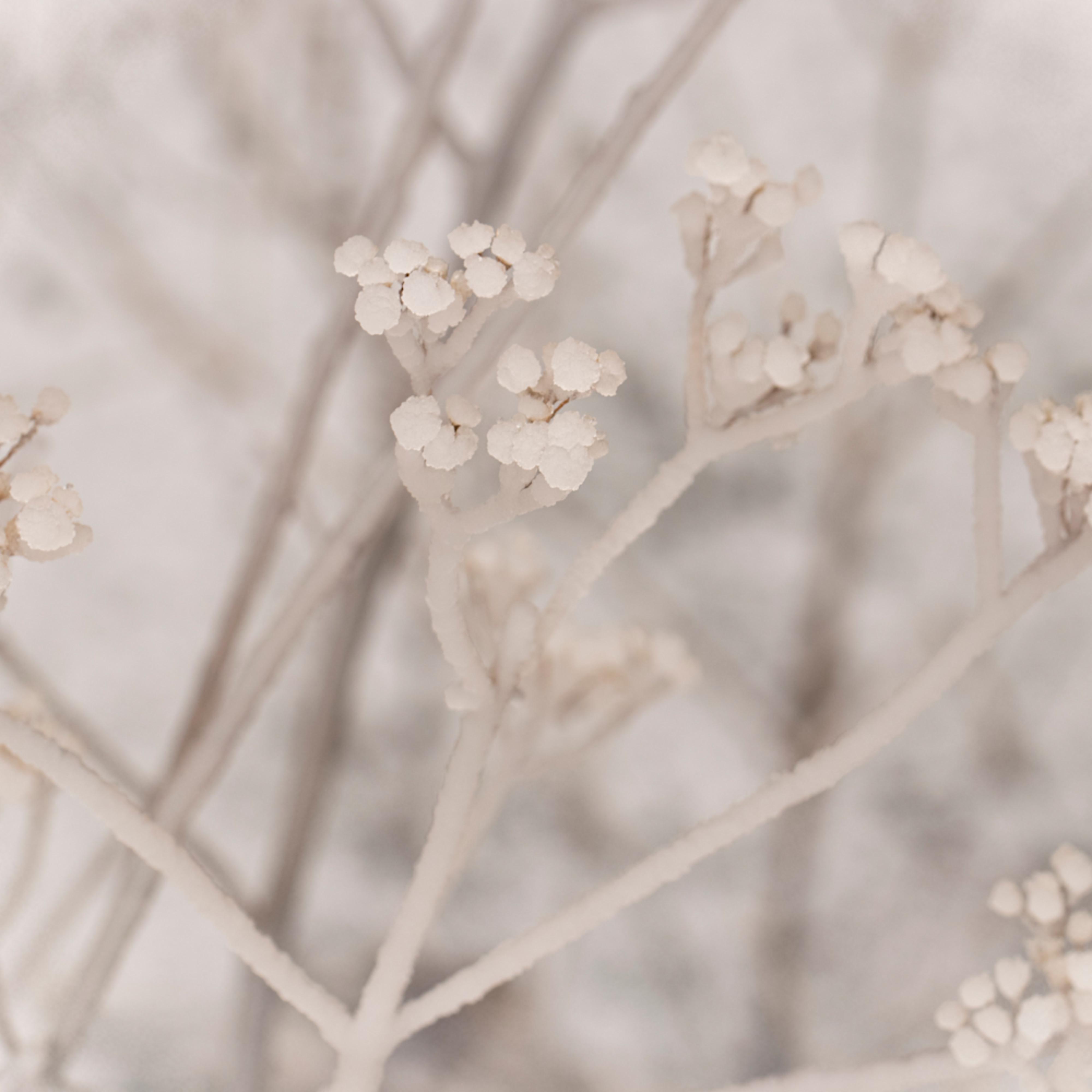 Ice on seed pods 1083 fss jvkp6w
