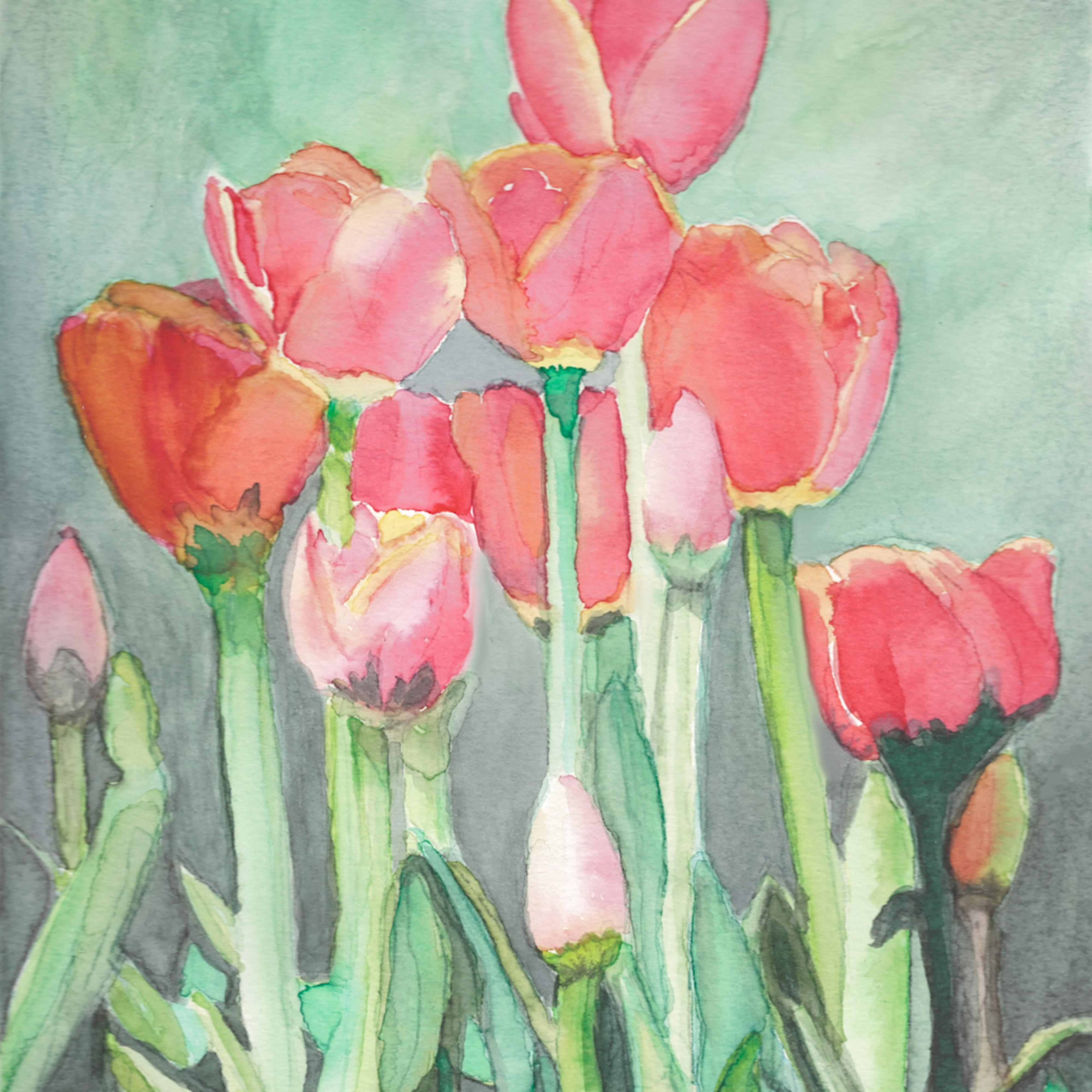 Poppies pnjawr