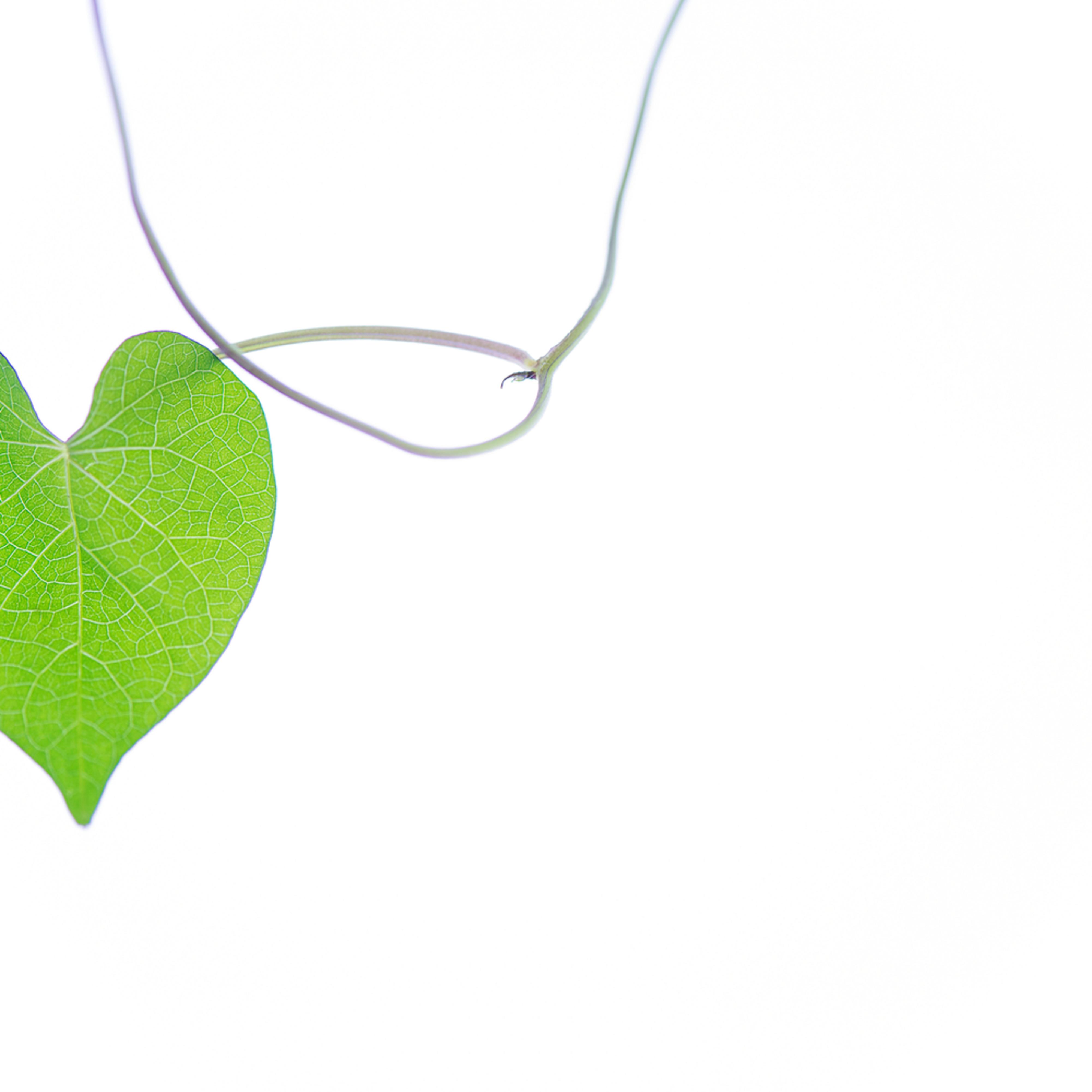 Love hanging around lyokl4