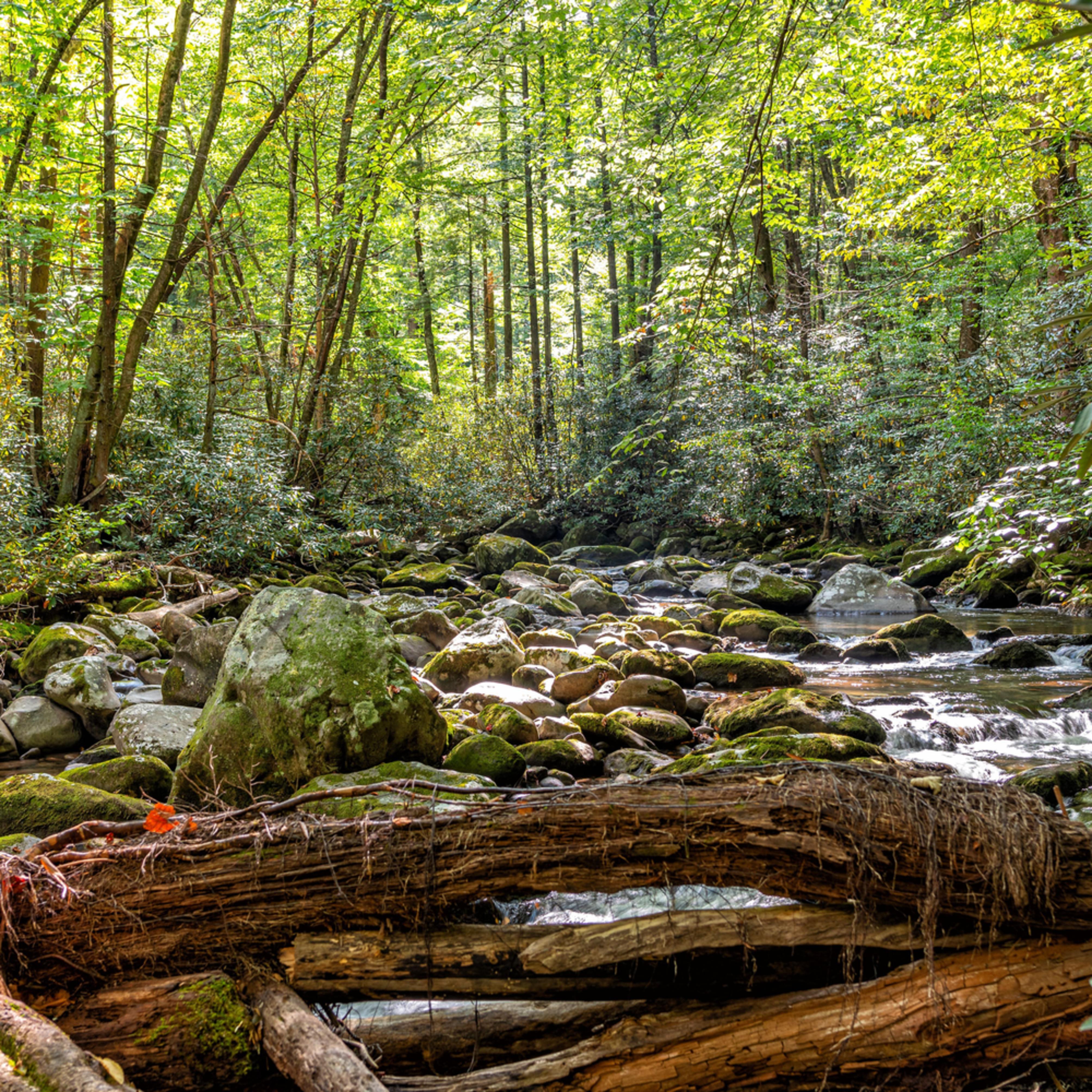 Creek4 asiyej