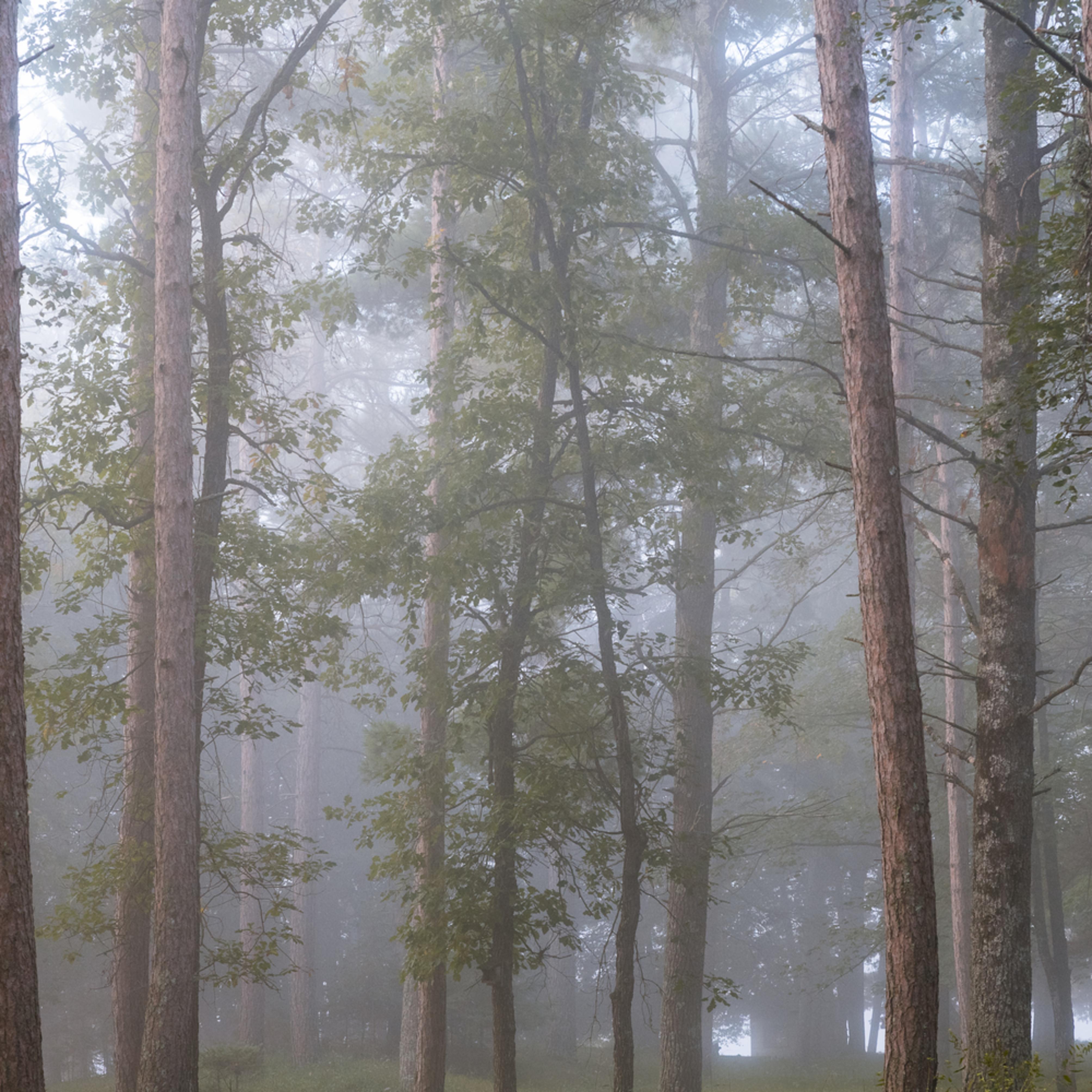 Misty forest zlpmnm