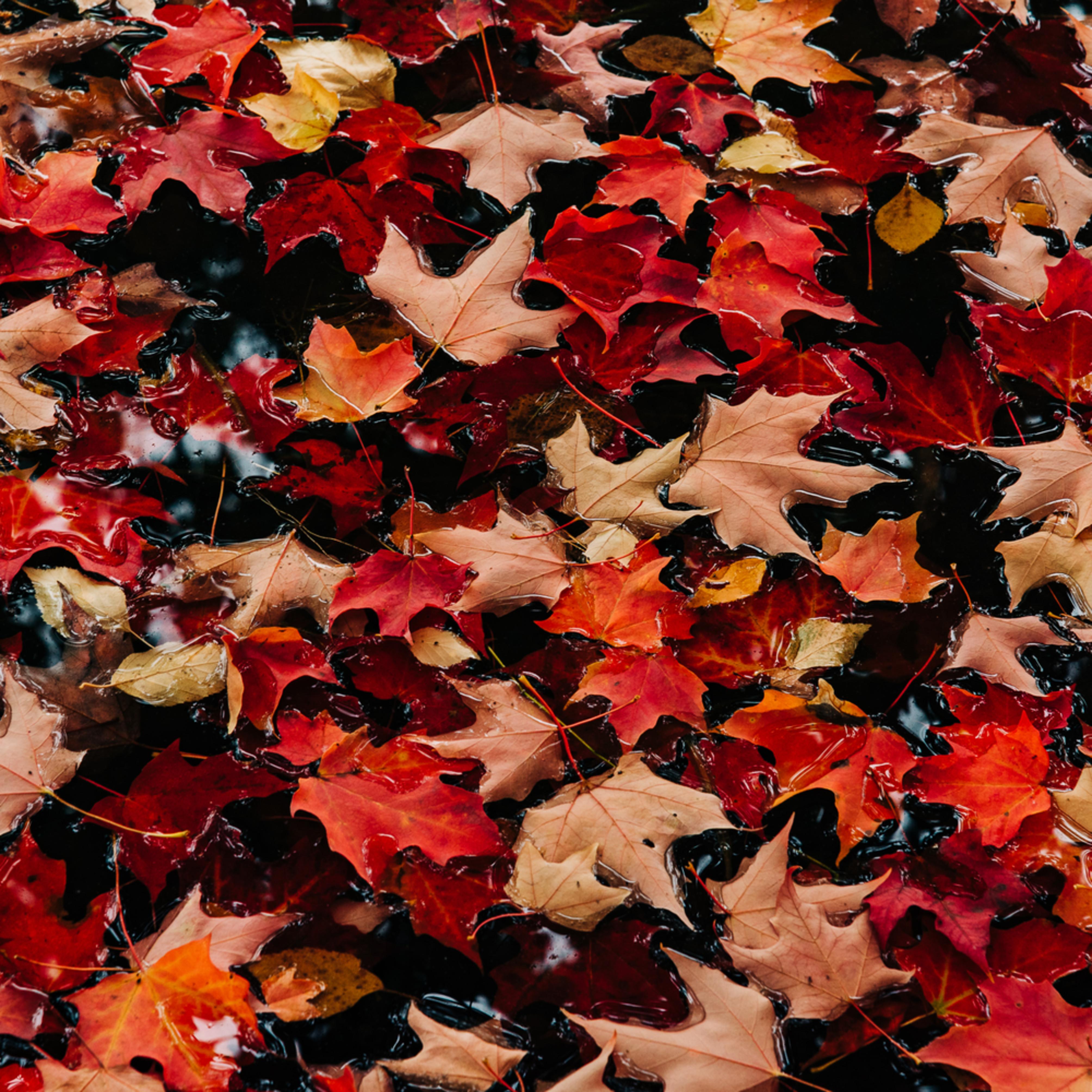 Colors   autumn leaves ii cfszw9
