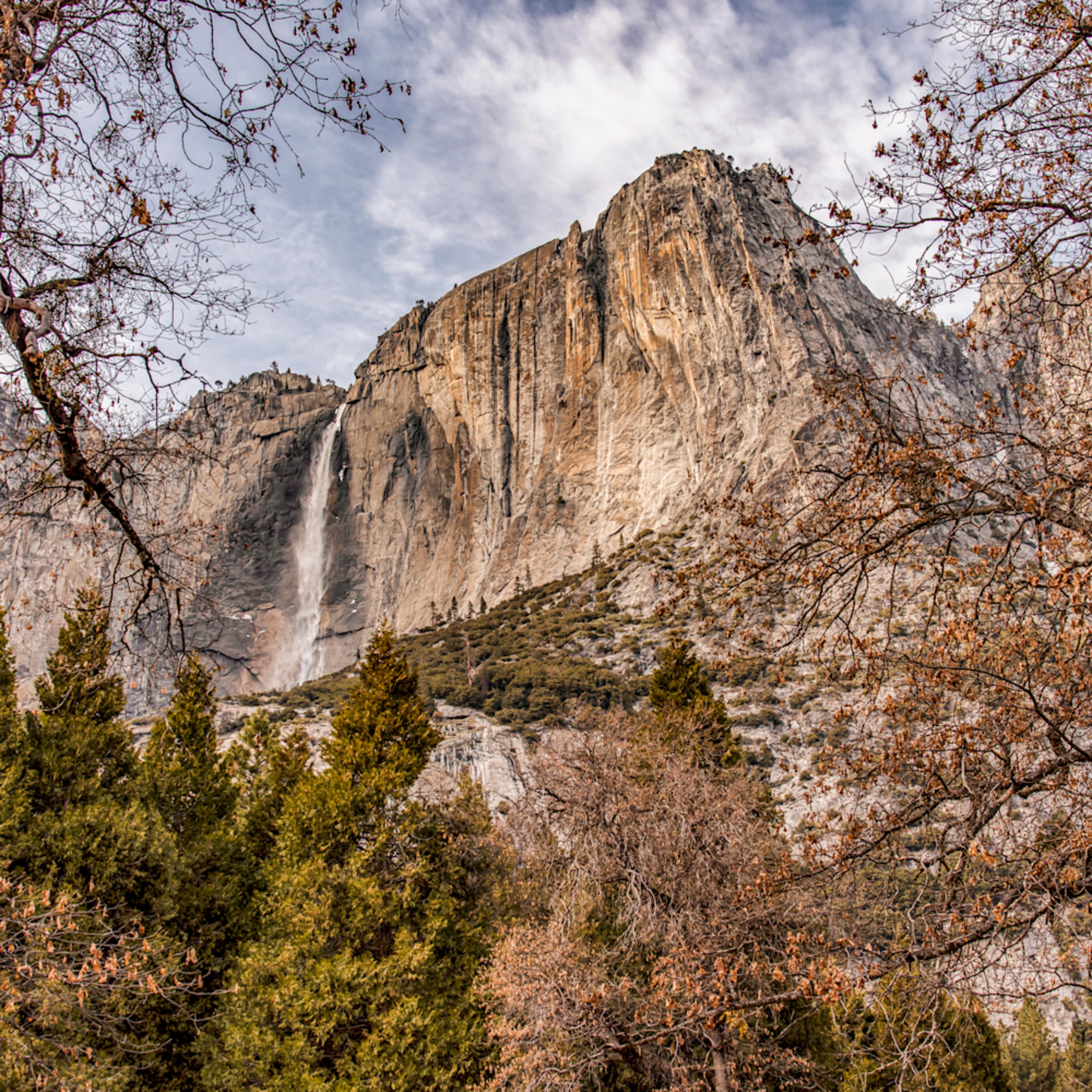 Yosemite falls pine trees 1 cdlhdz