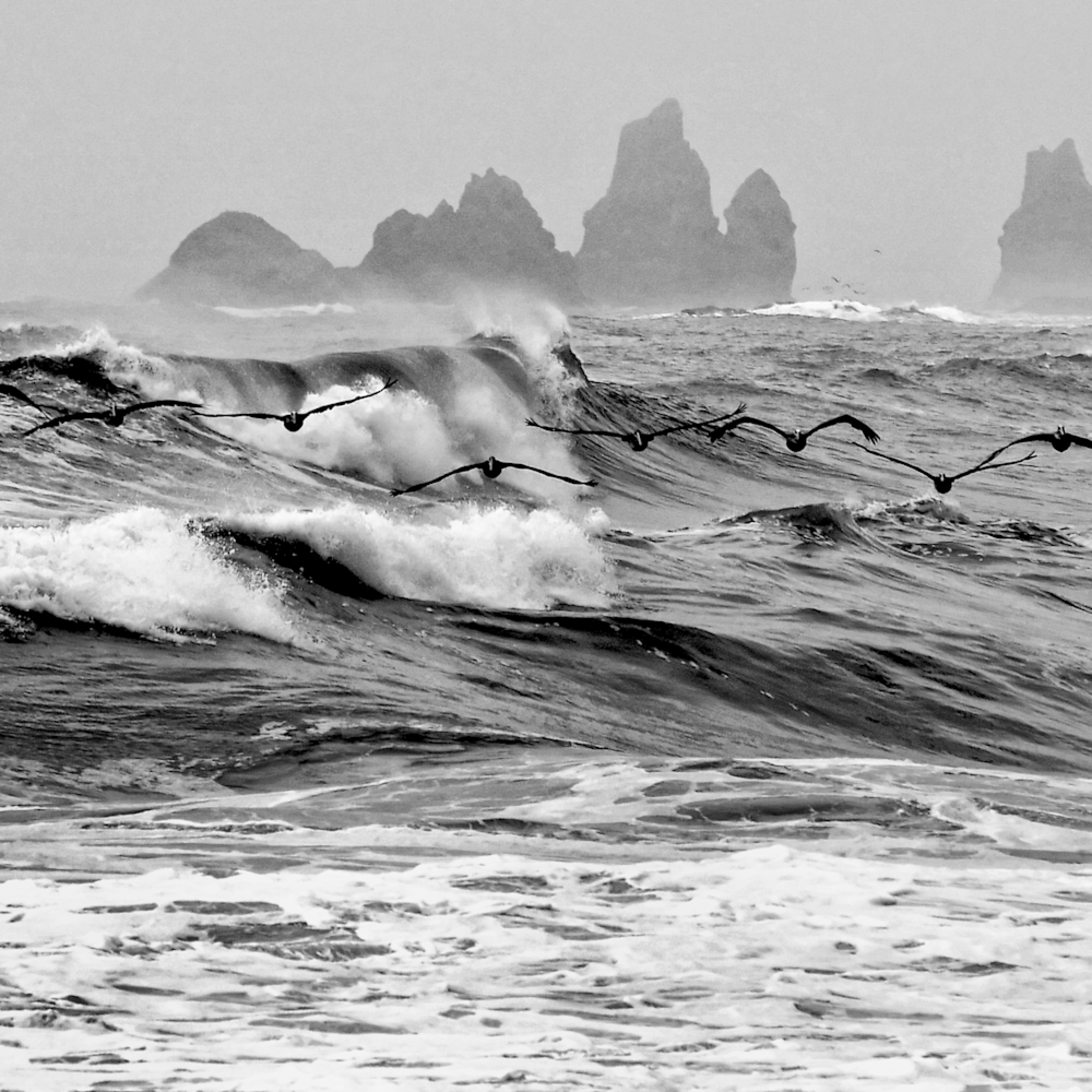 Pelicans skimming the waves ovjcdl