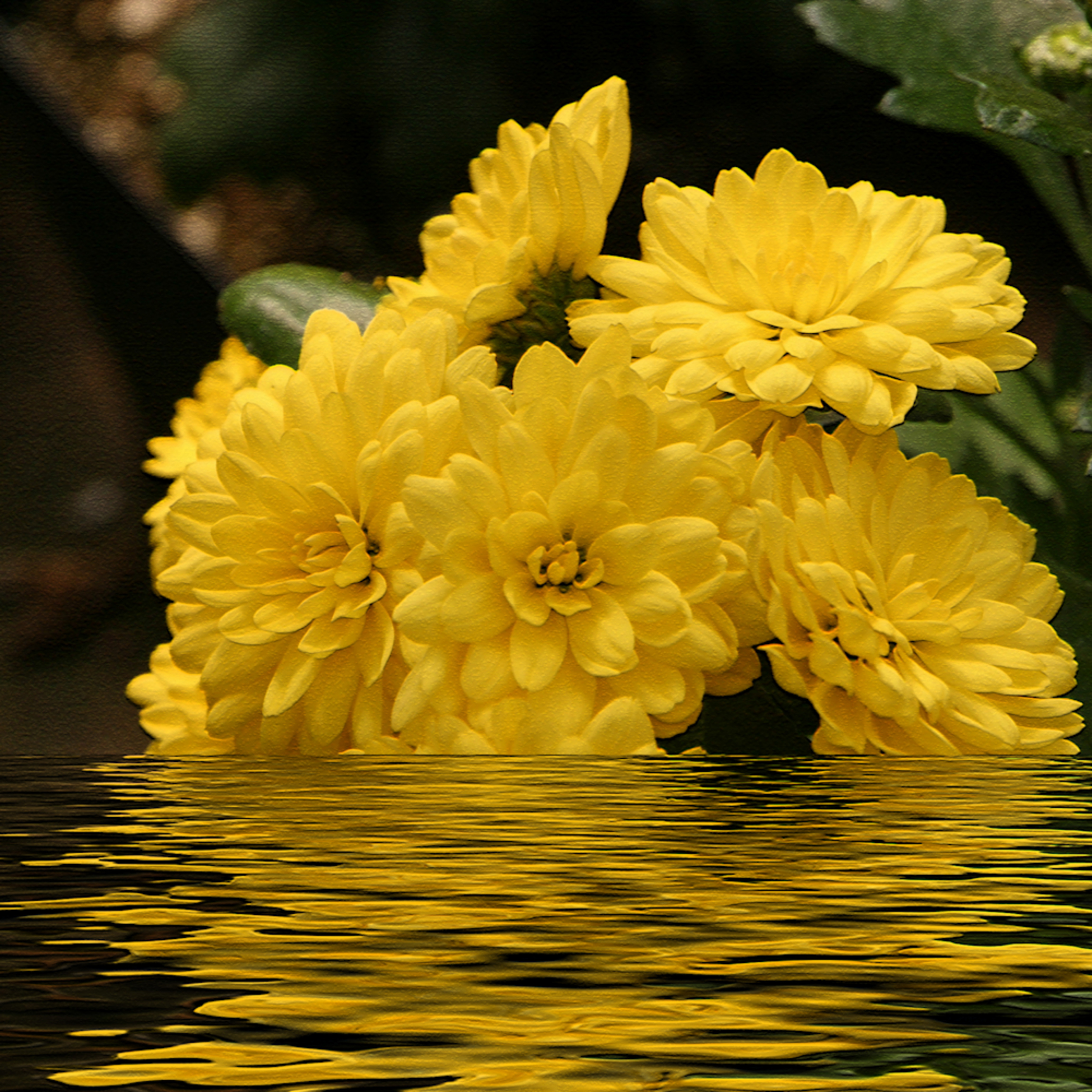 Flowers reflections 2 x3pgtb