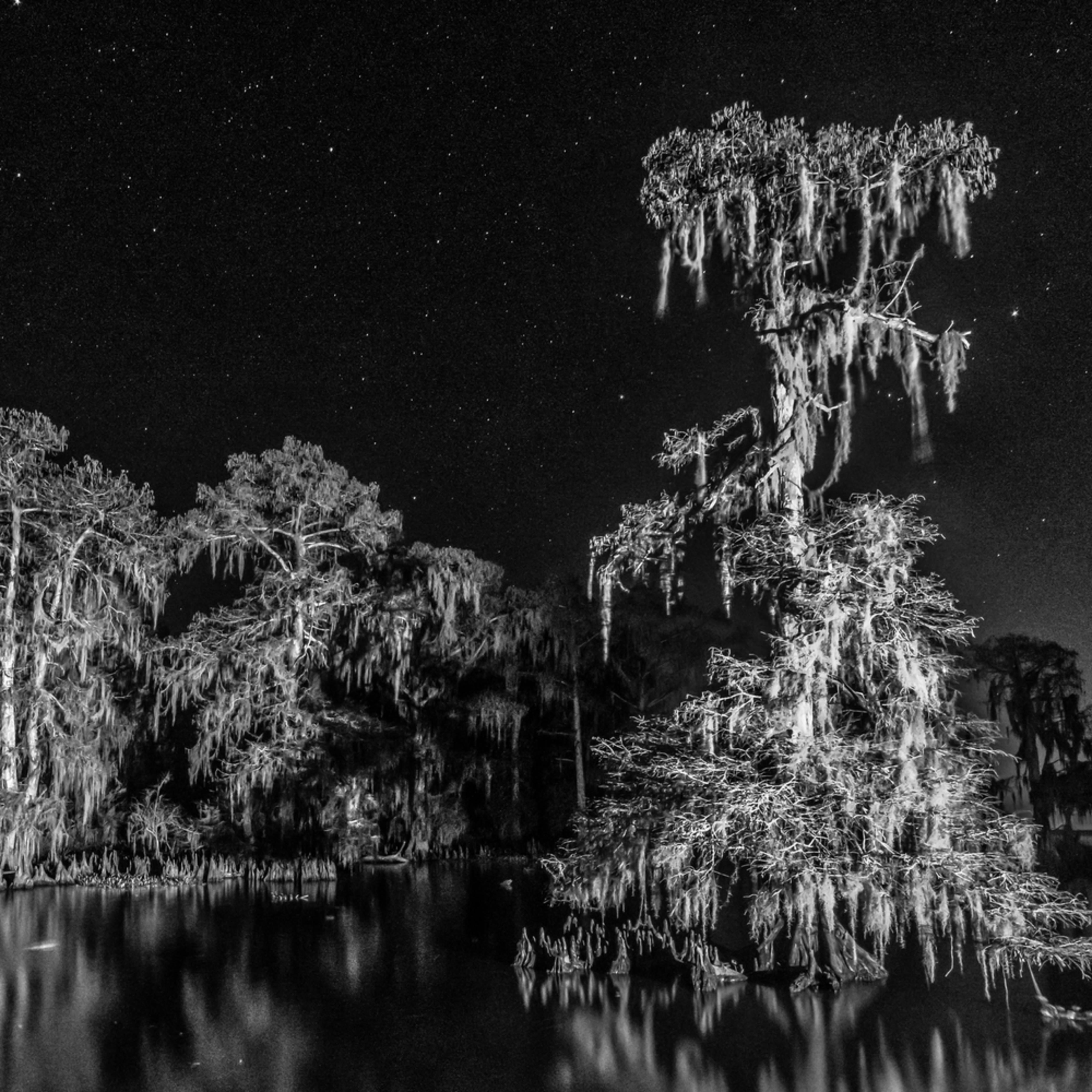 Andy crawford photography 190106 lake maurepas swamp 002 ojais2