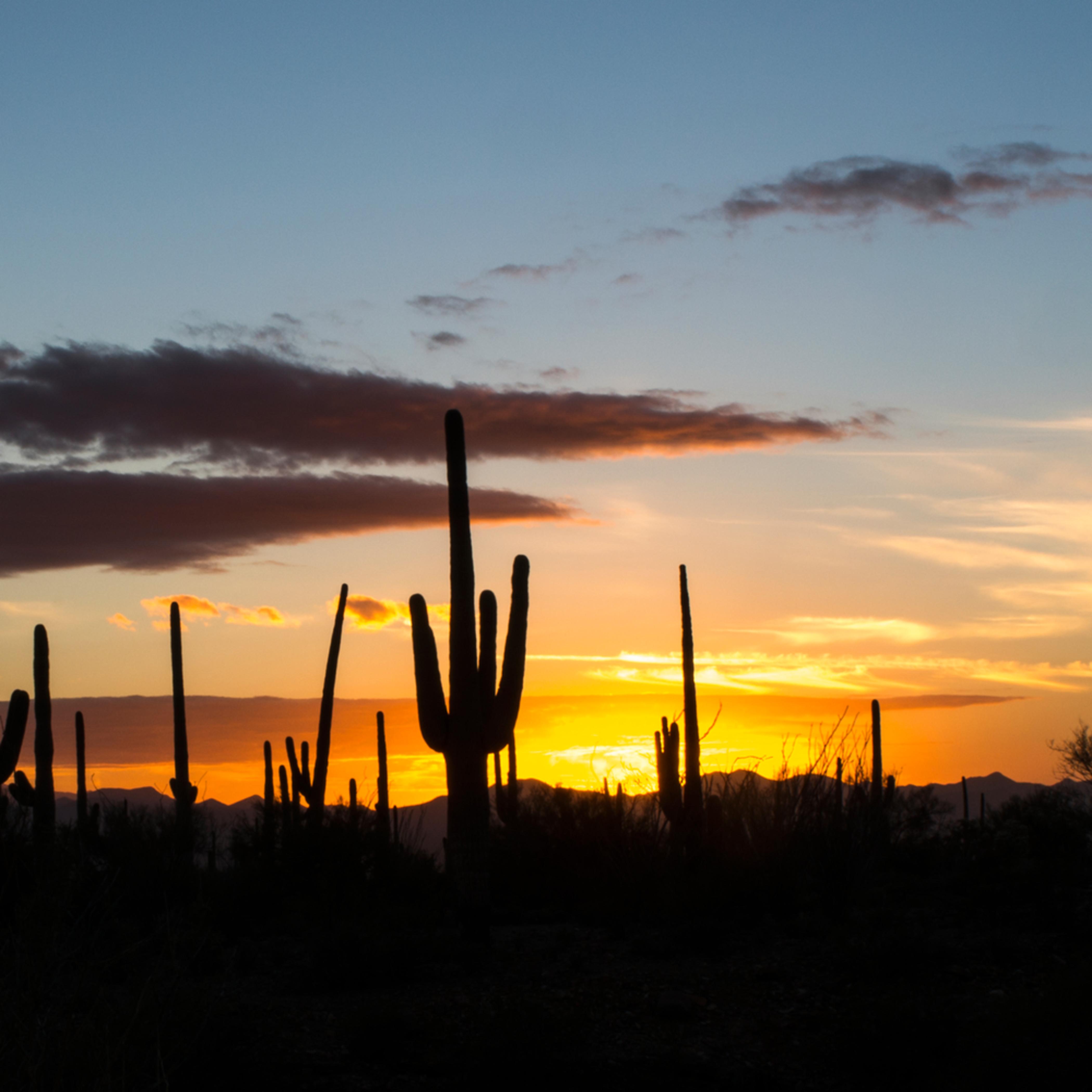 Dp417 saguaro sunset pano aruwsq