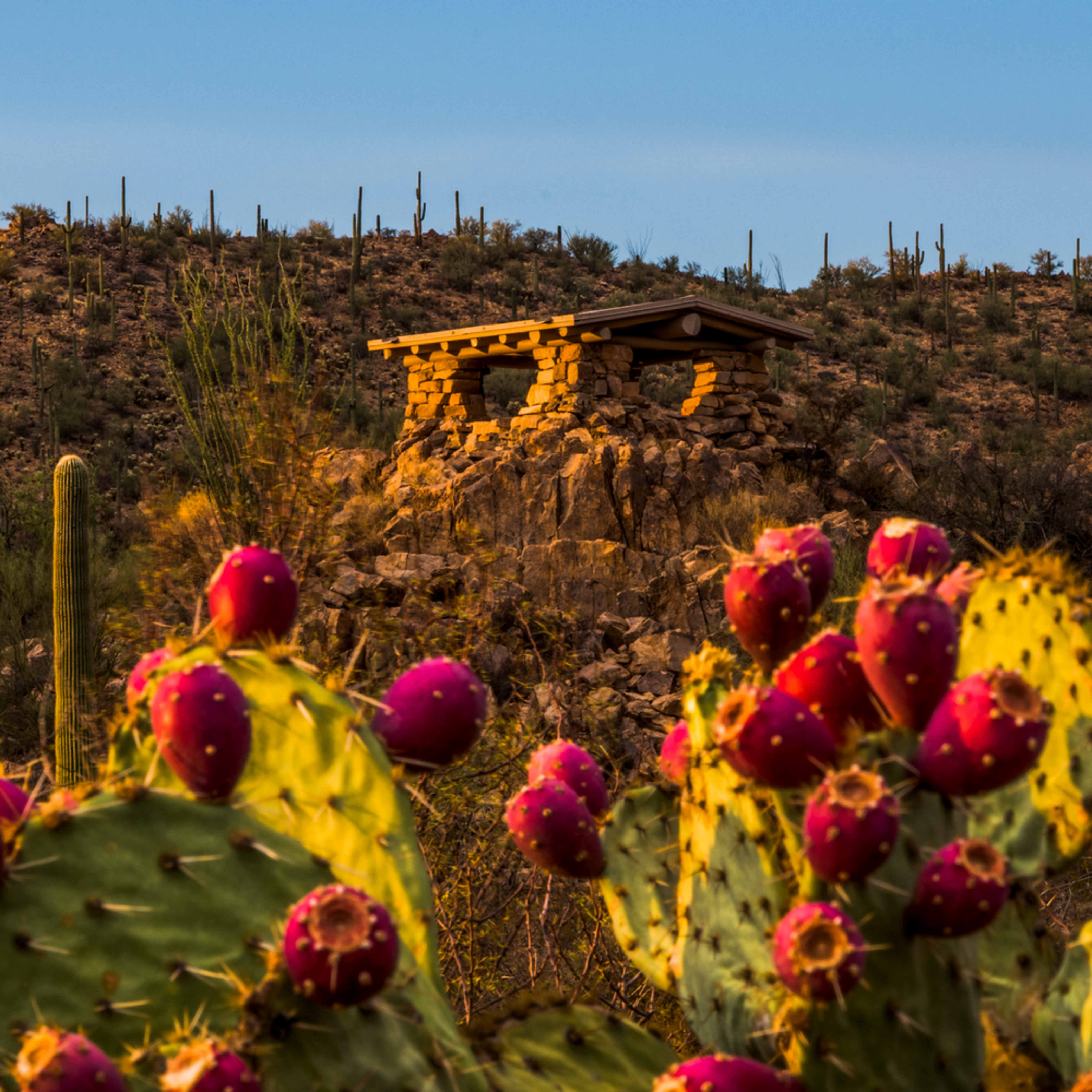 Dp467 prickly pear lookout yy7xyw