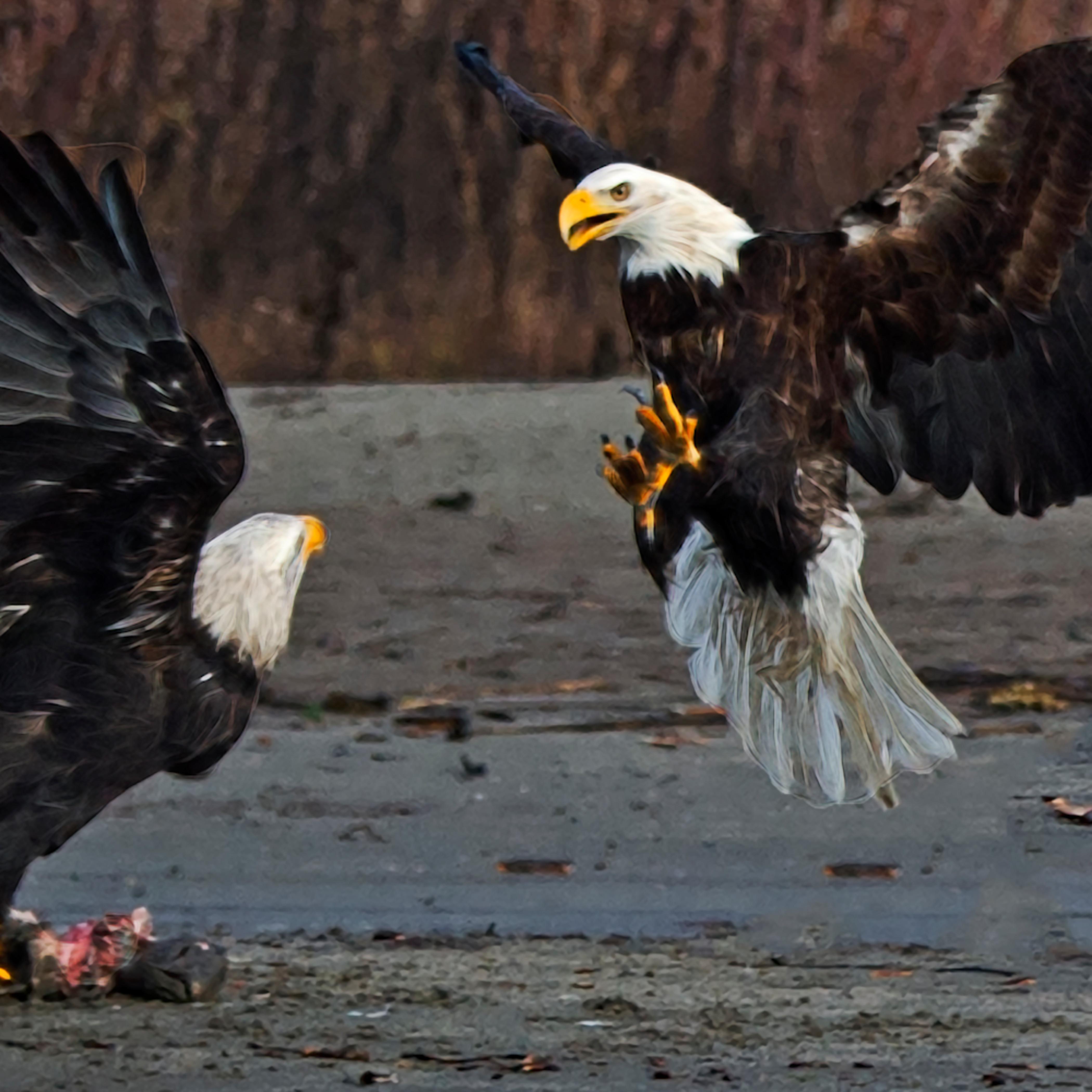 Fighting eagles krjfpm