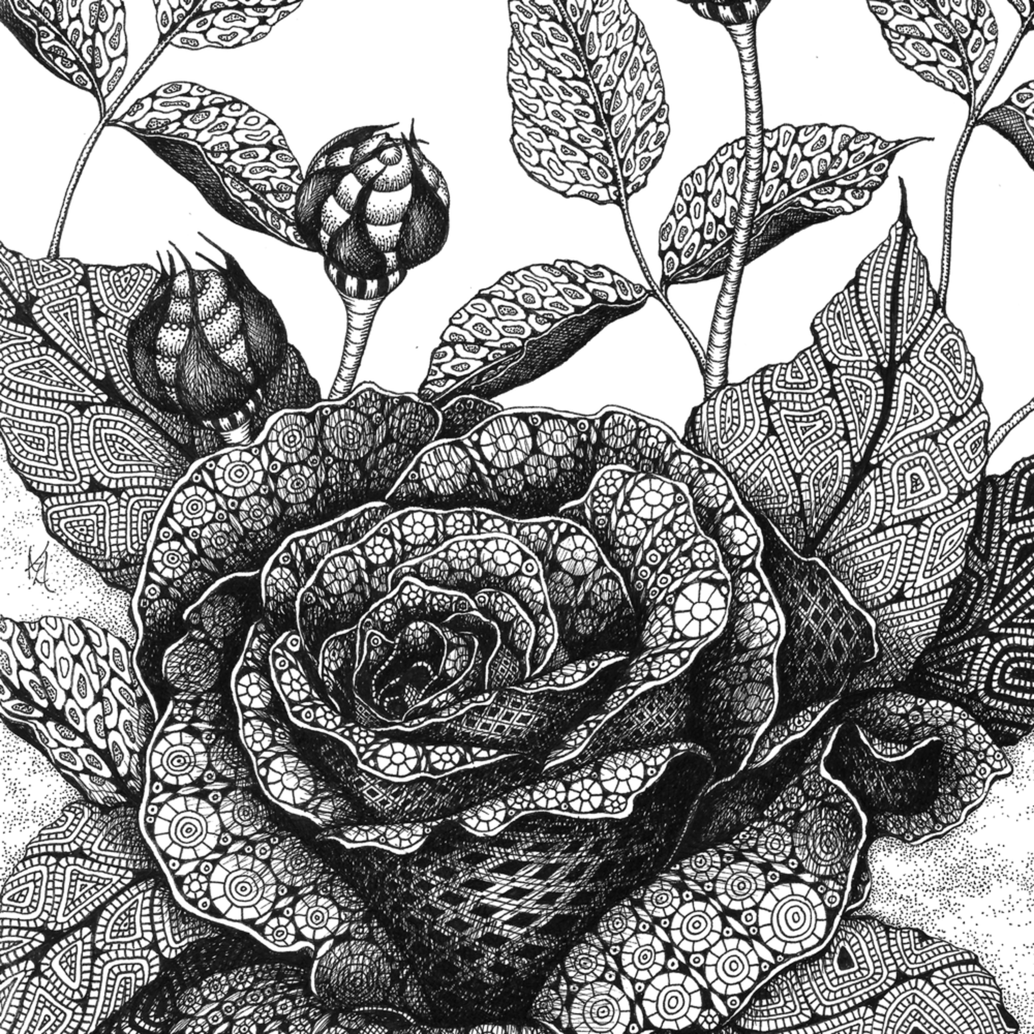 Rose fxilwx