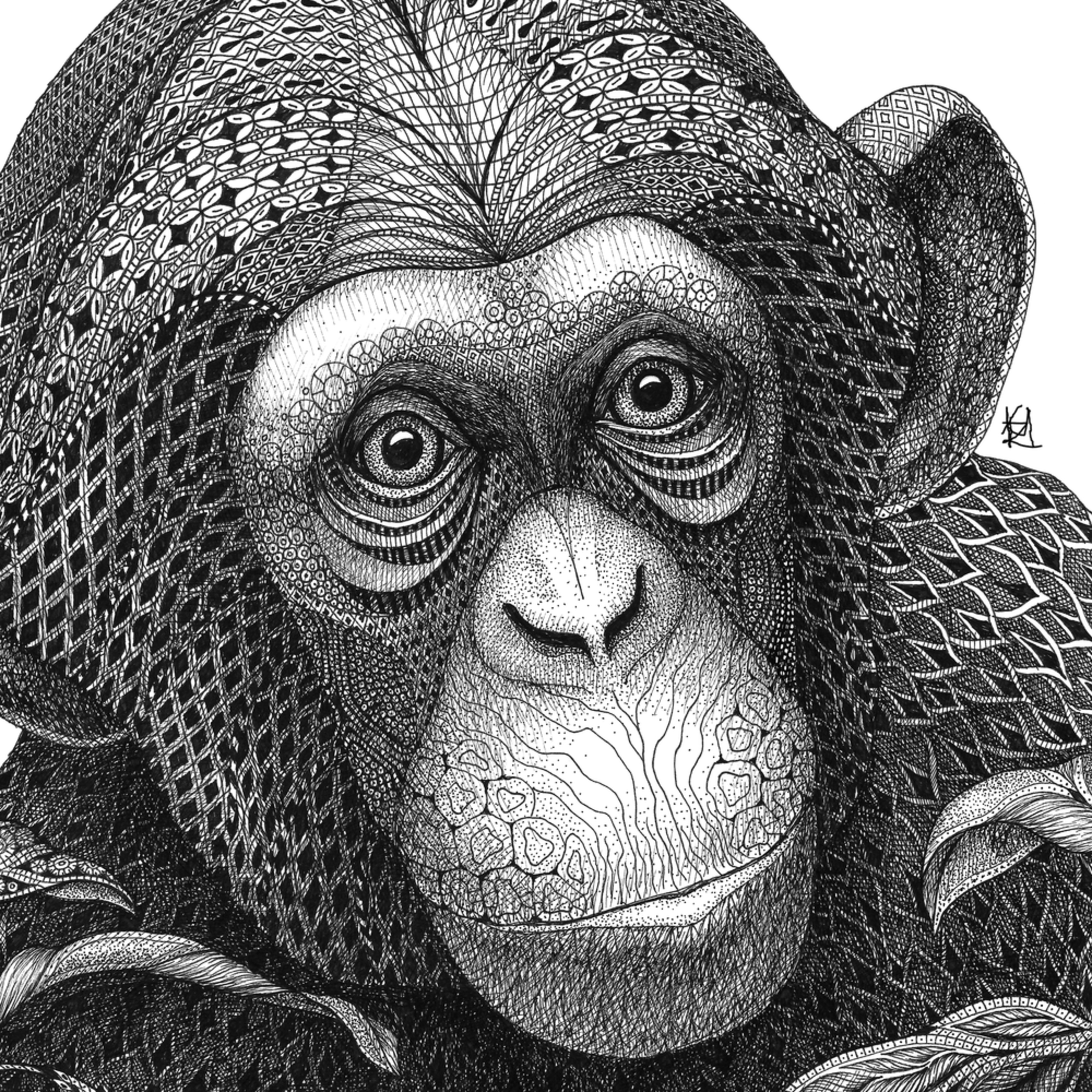 Chimp  cropped ifbkqa