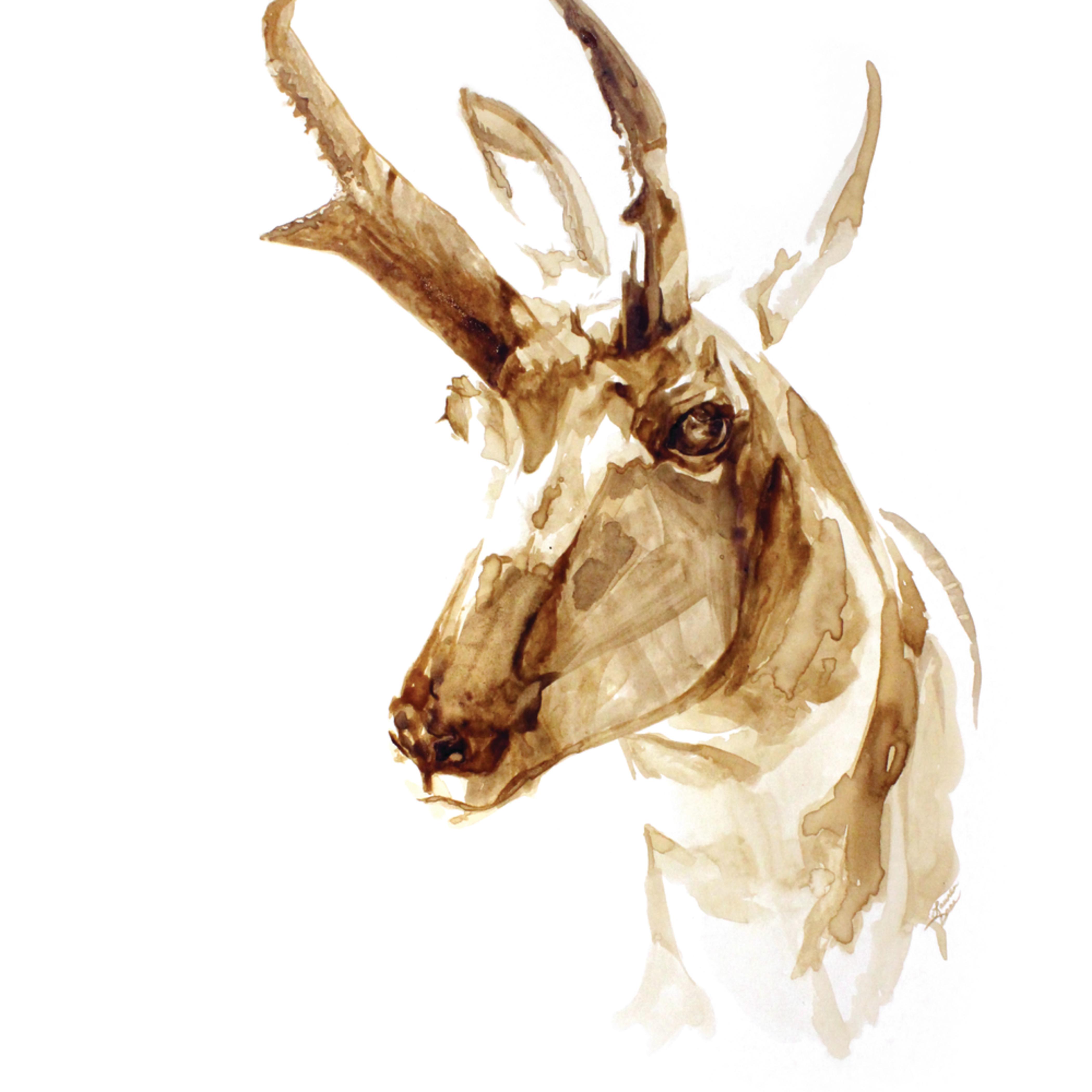 Antelope print t1dedm