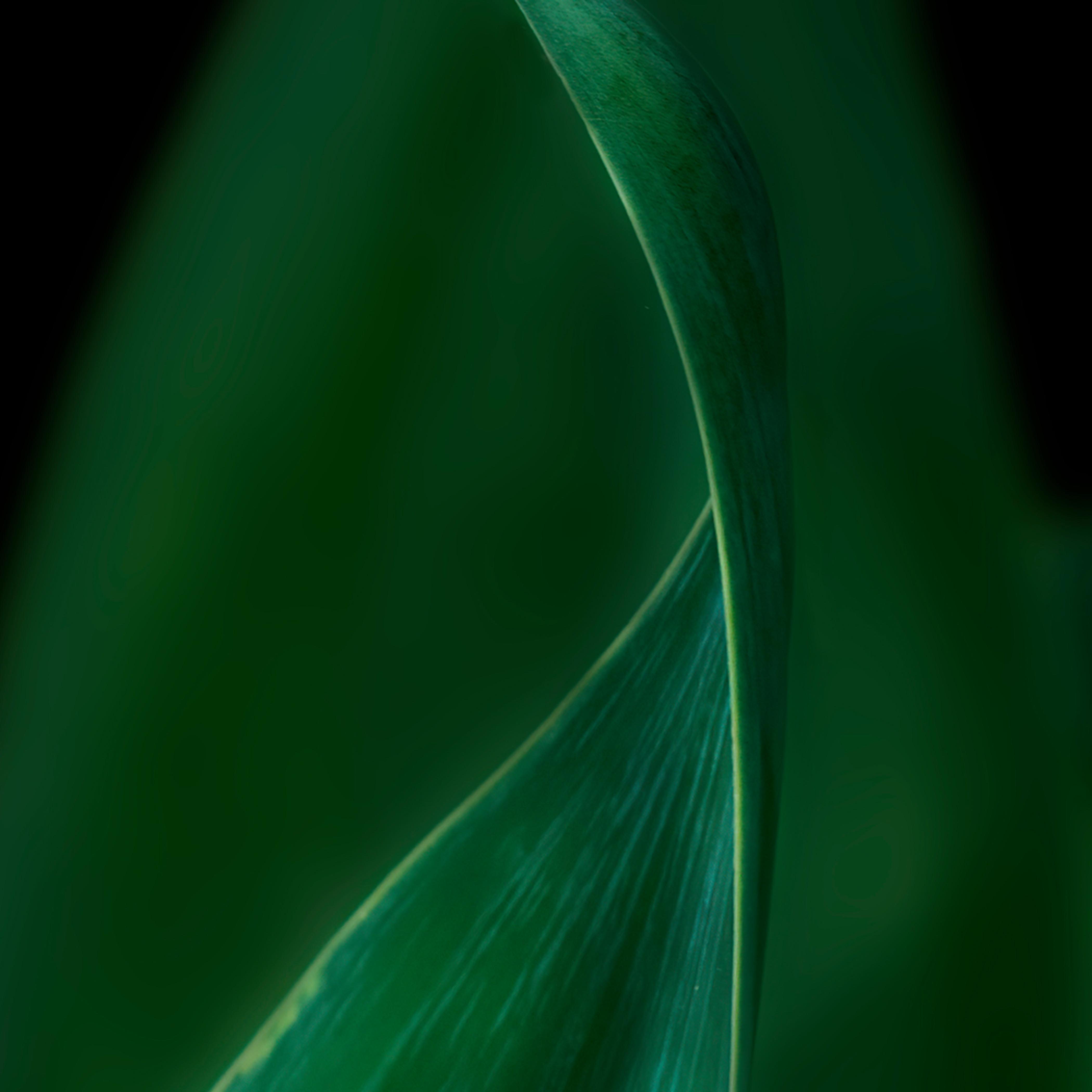 Green curving tzkzdc