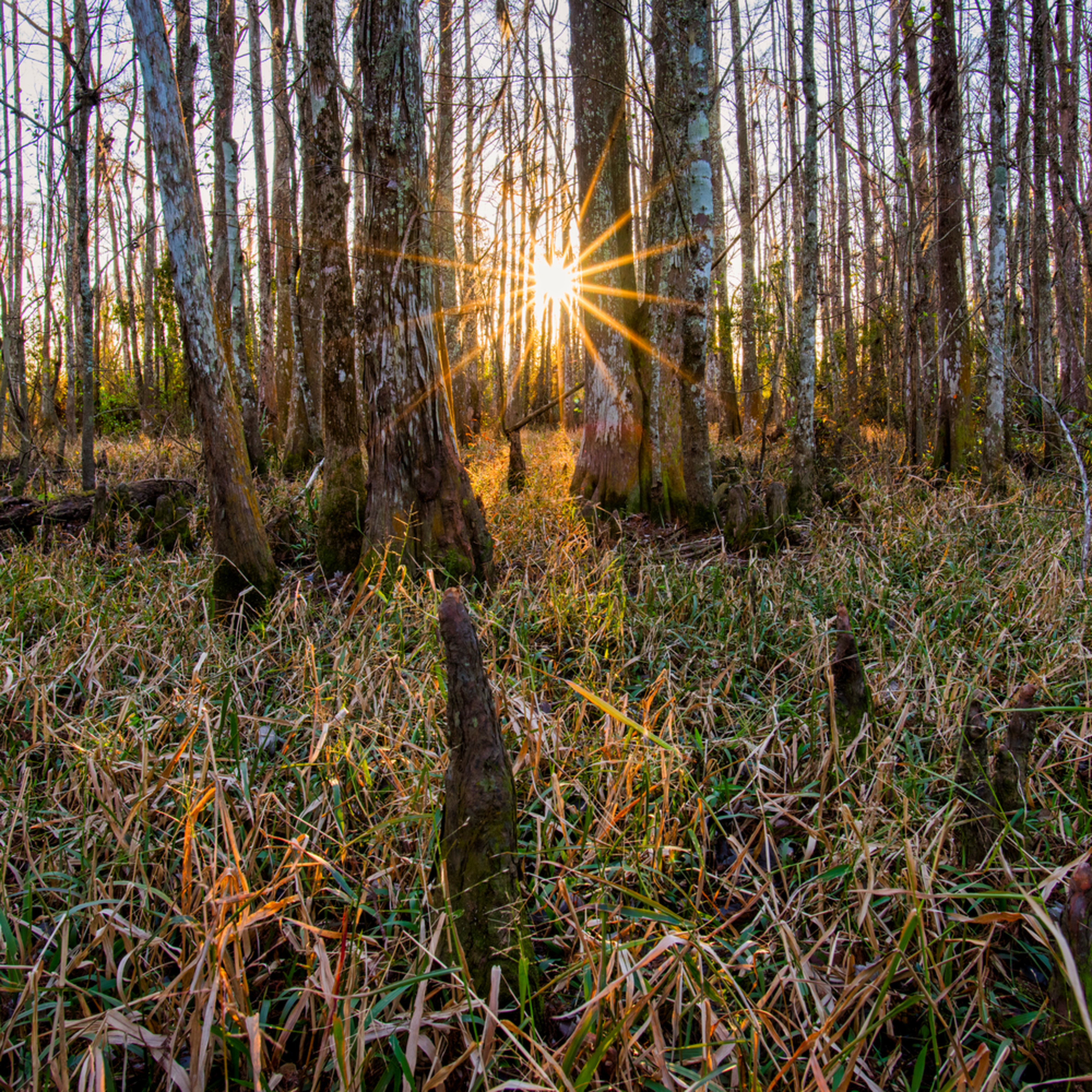 Andy crawford photography fairview riverside state park swamp 1 iylewm