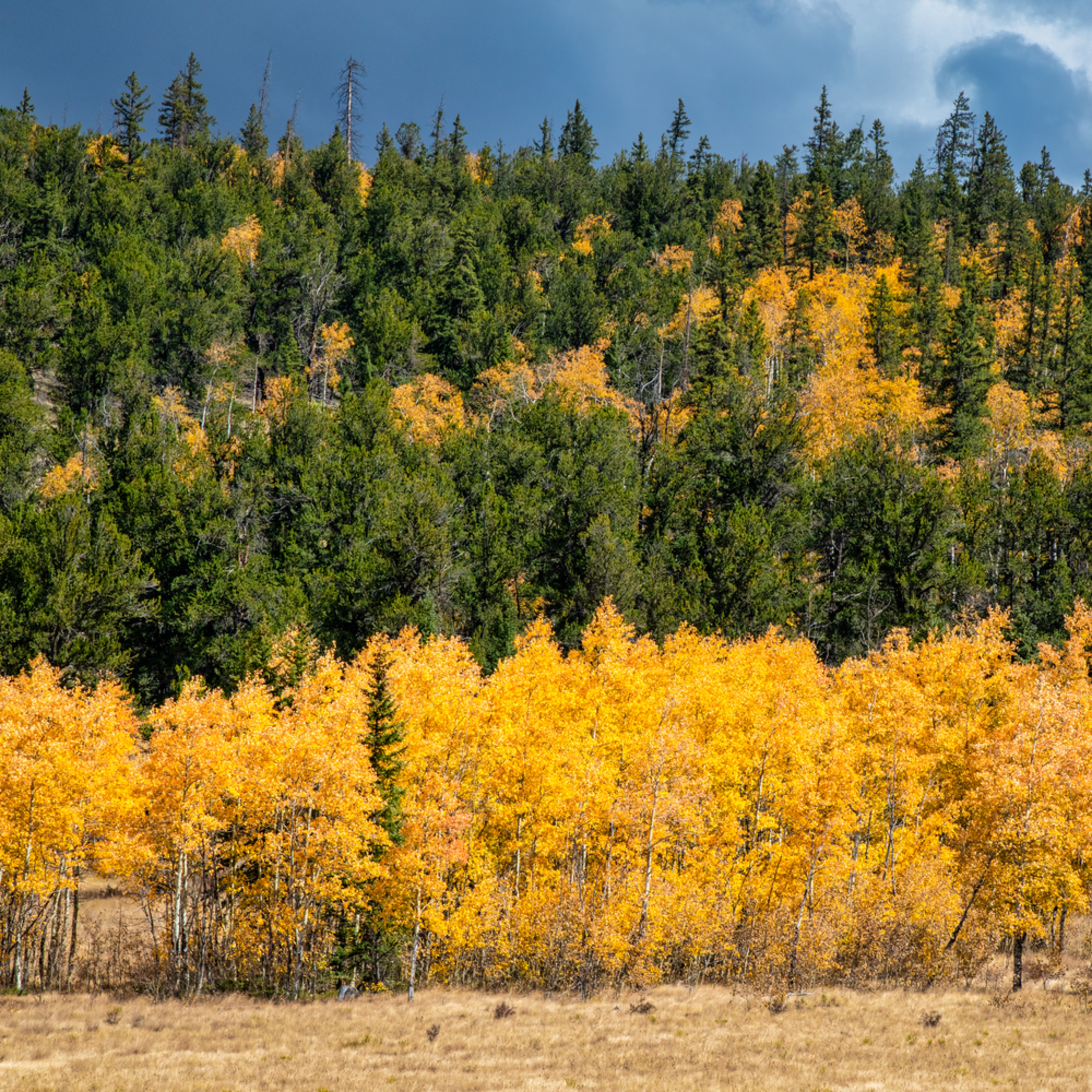 Andy crawford photography colorado aspens 12 fbgkna