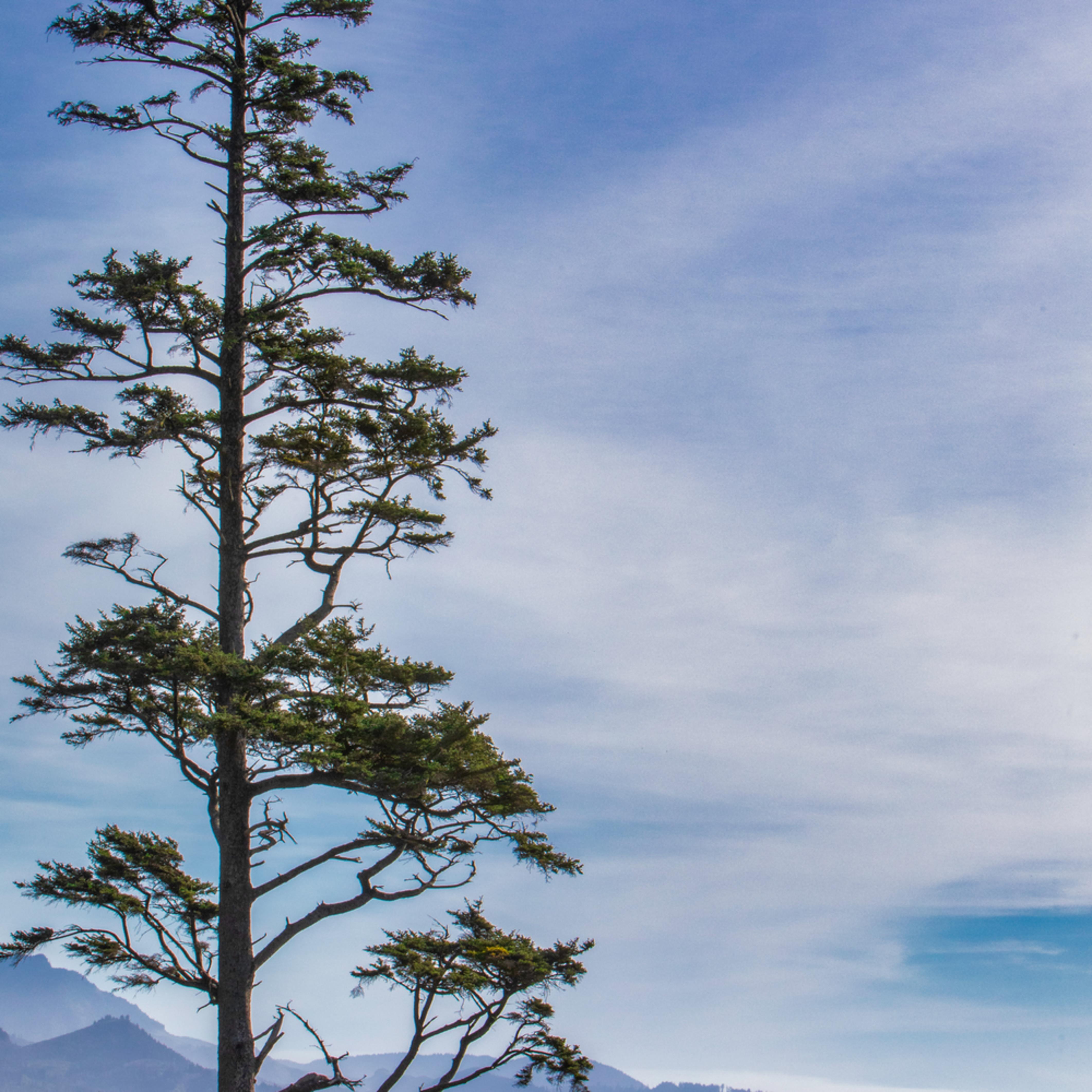 Orgcoastlinetree nnywpg