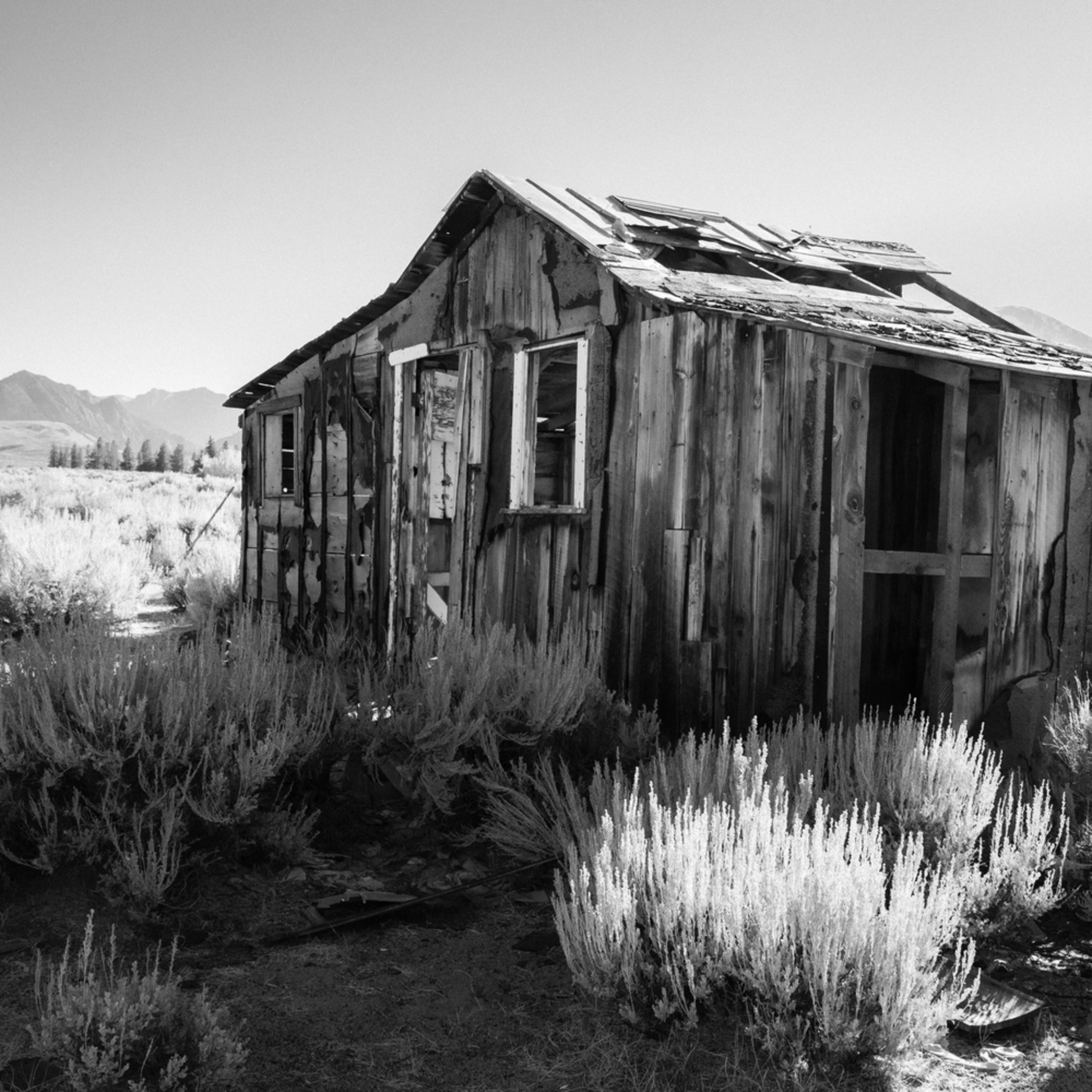 Desolation xq7qtn