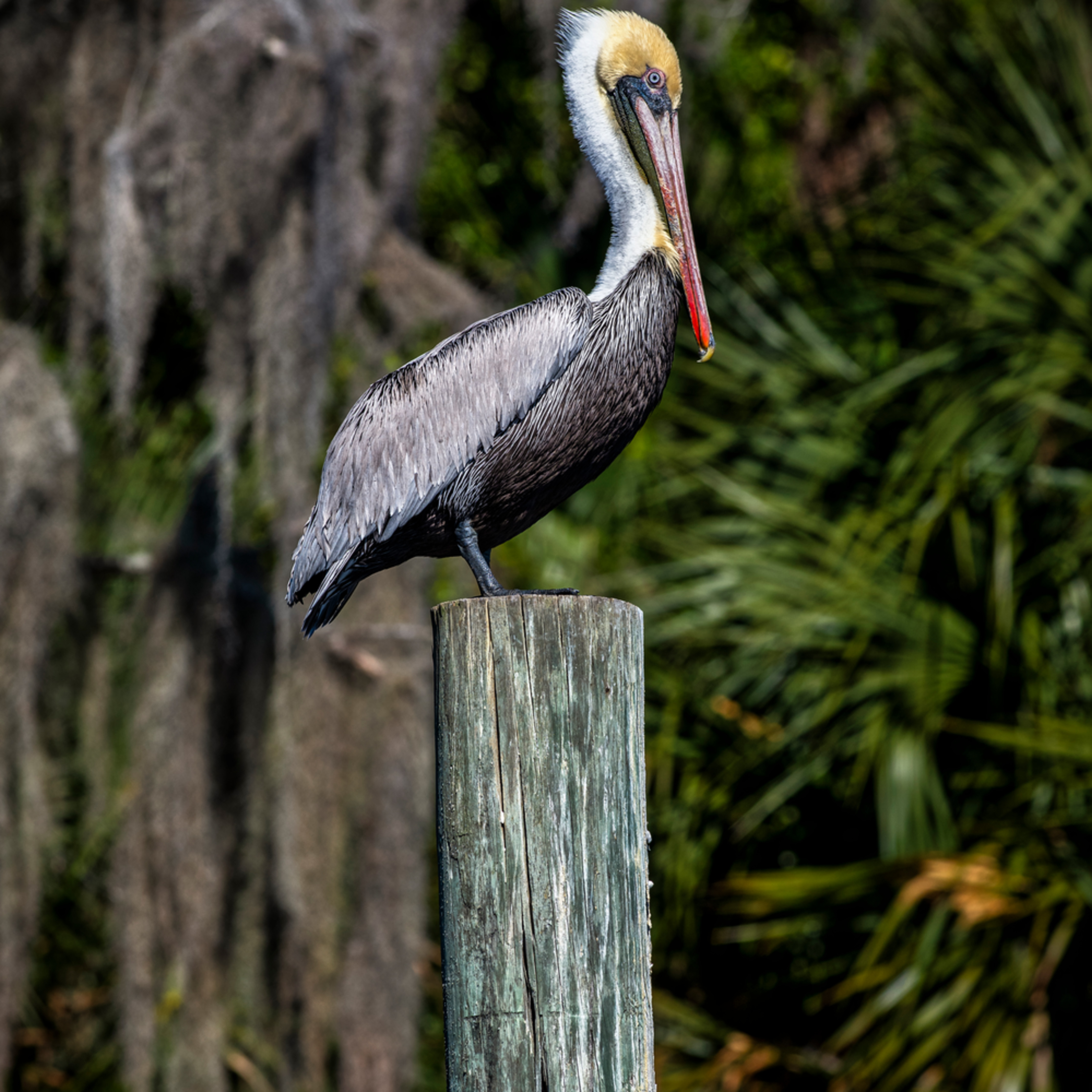 Andy crawford photography pelican wzofqj