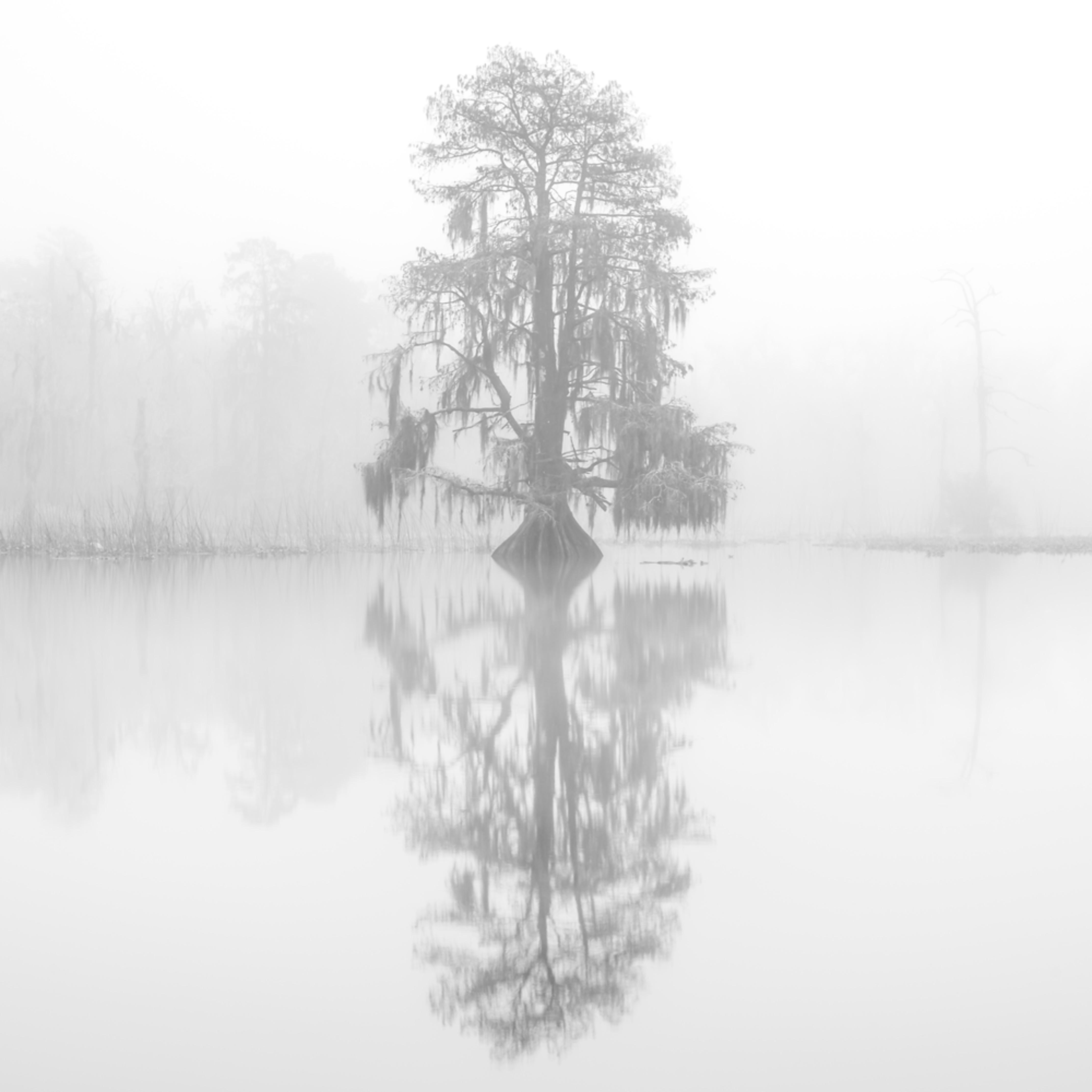 Andy crawford photography maurepas swamp 20171219 6 fyimz8